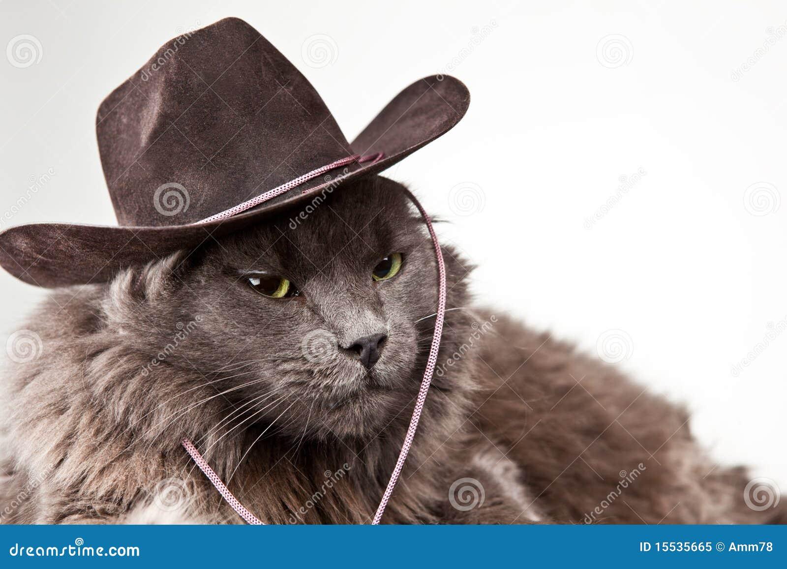 Fuzzy Cat Wearing Hat