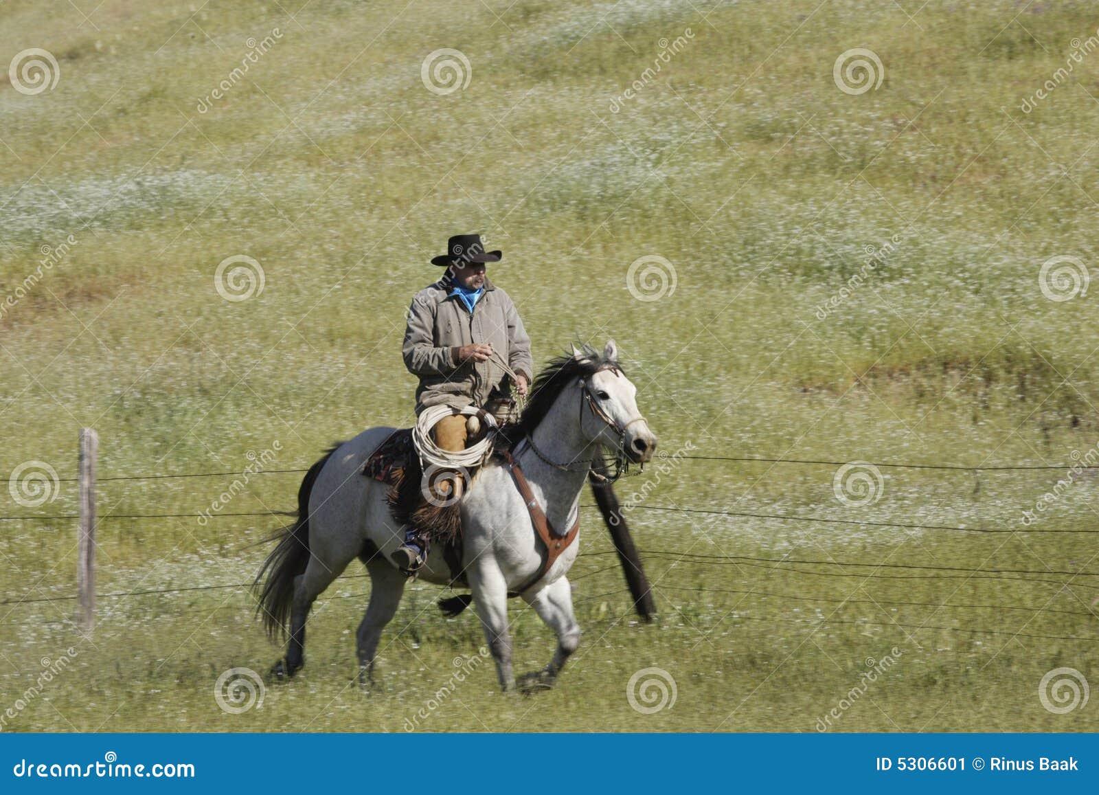 Download Cowboy galoppante immagine stock. Immagine di equestrian - 5306601