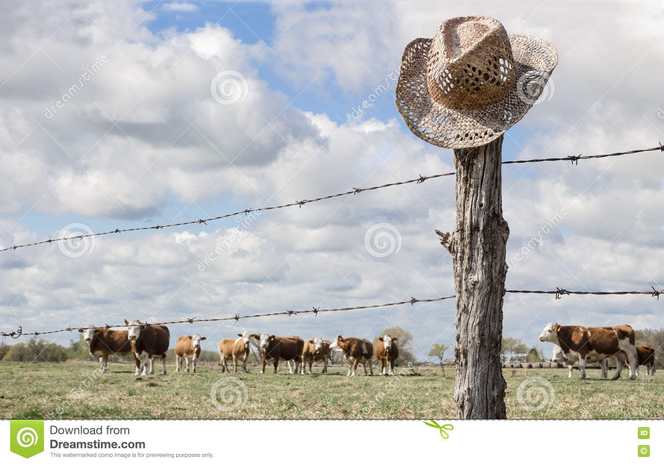 Cowboy Hat Hanging On Fence Post While Cattle Graze In Background ...