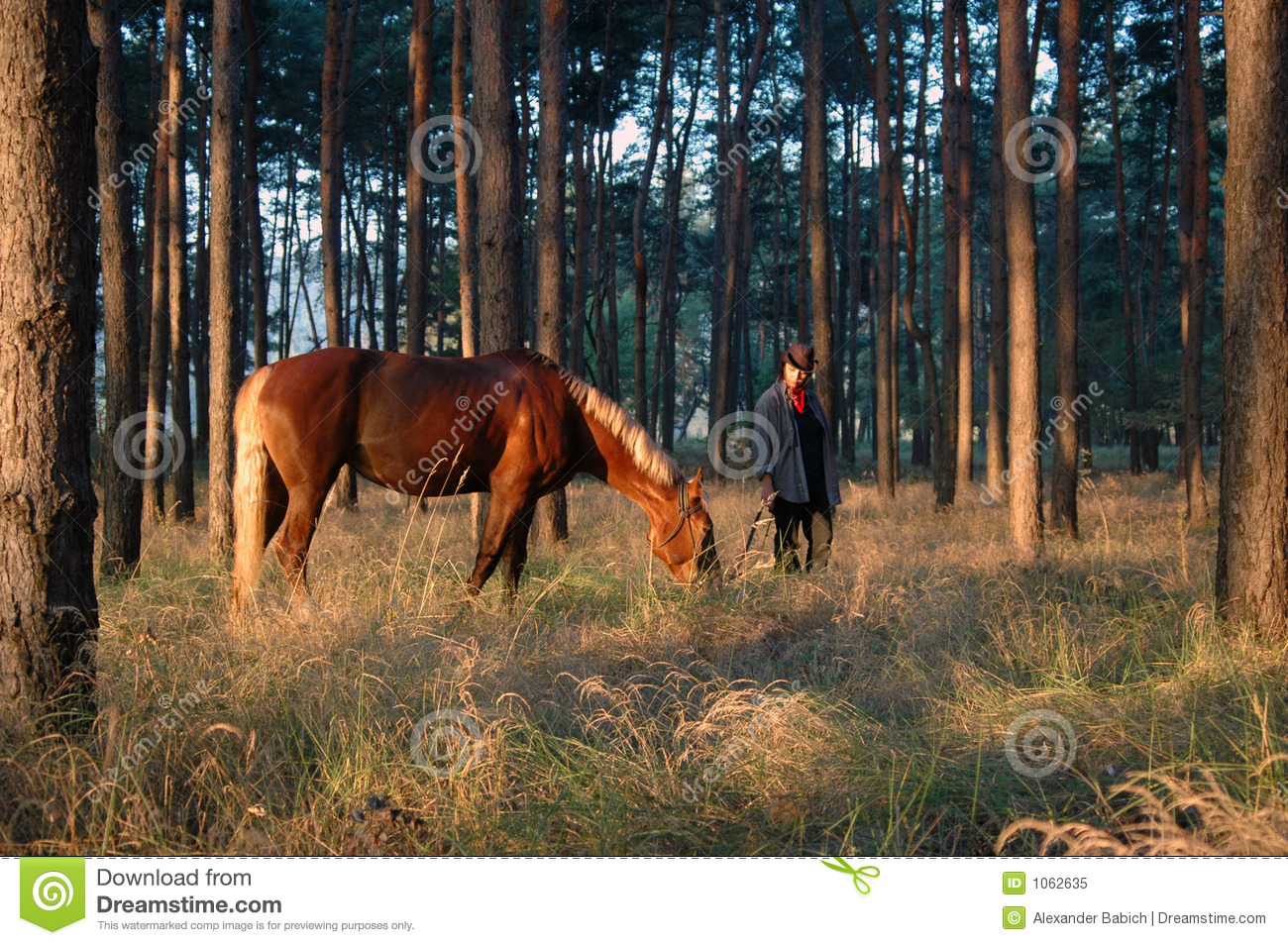 Two Headed Horse Or Two Look-a-like Ponies. Stock Image ...