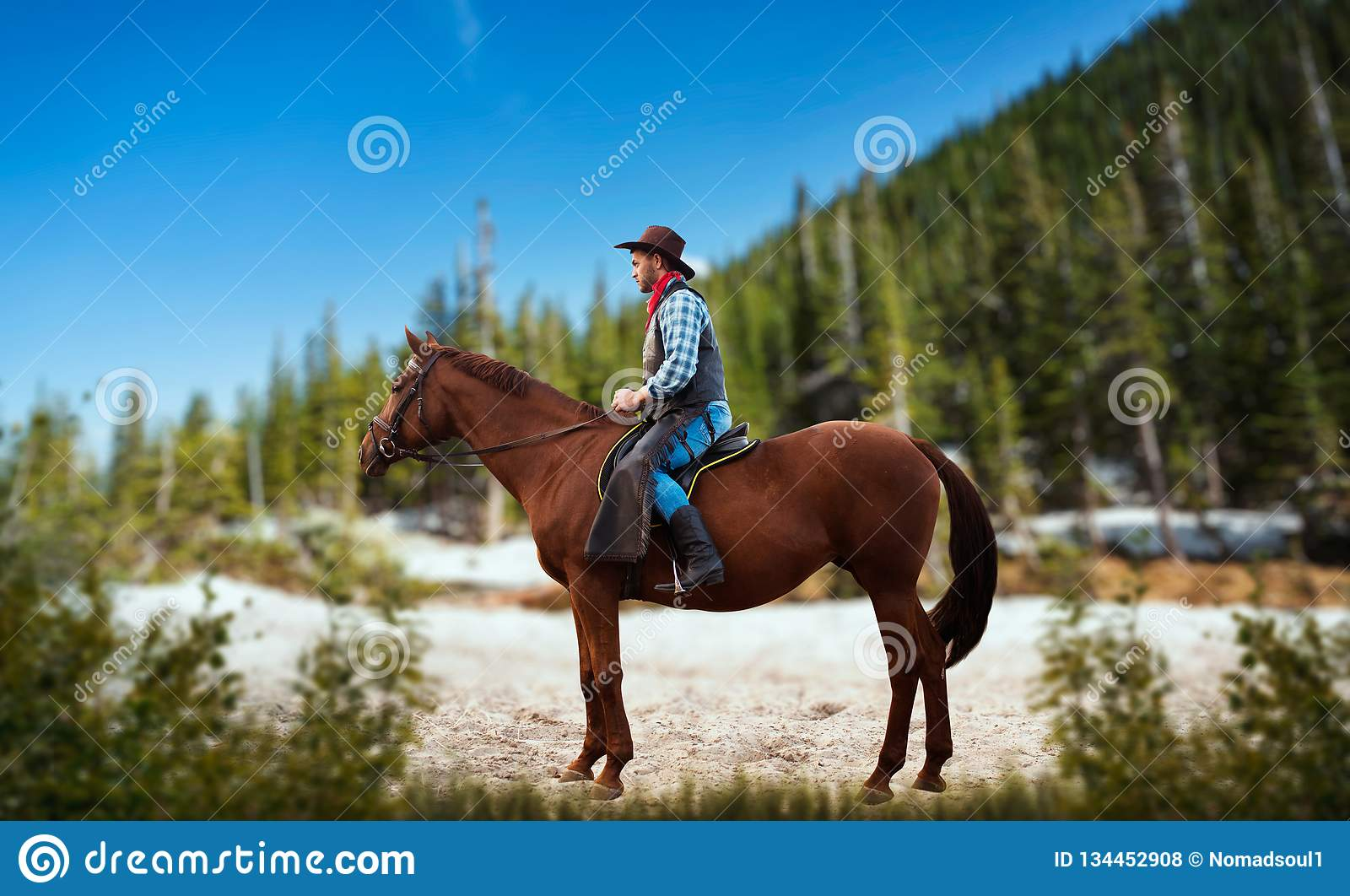 Cowboy In Jeans And Leather Jacket Riding A Horse Stock Photo Image Of Outdoor Person 134452908