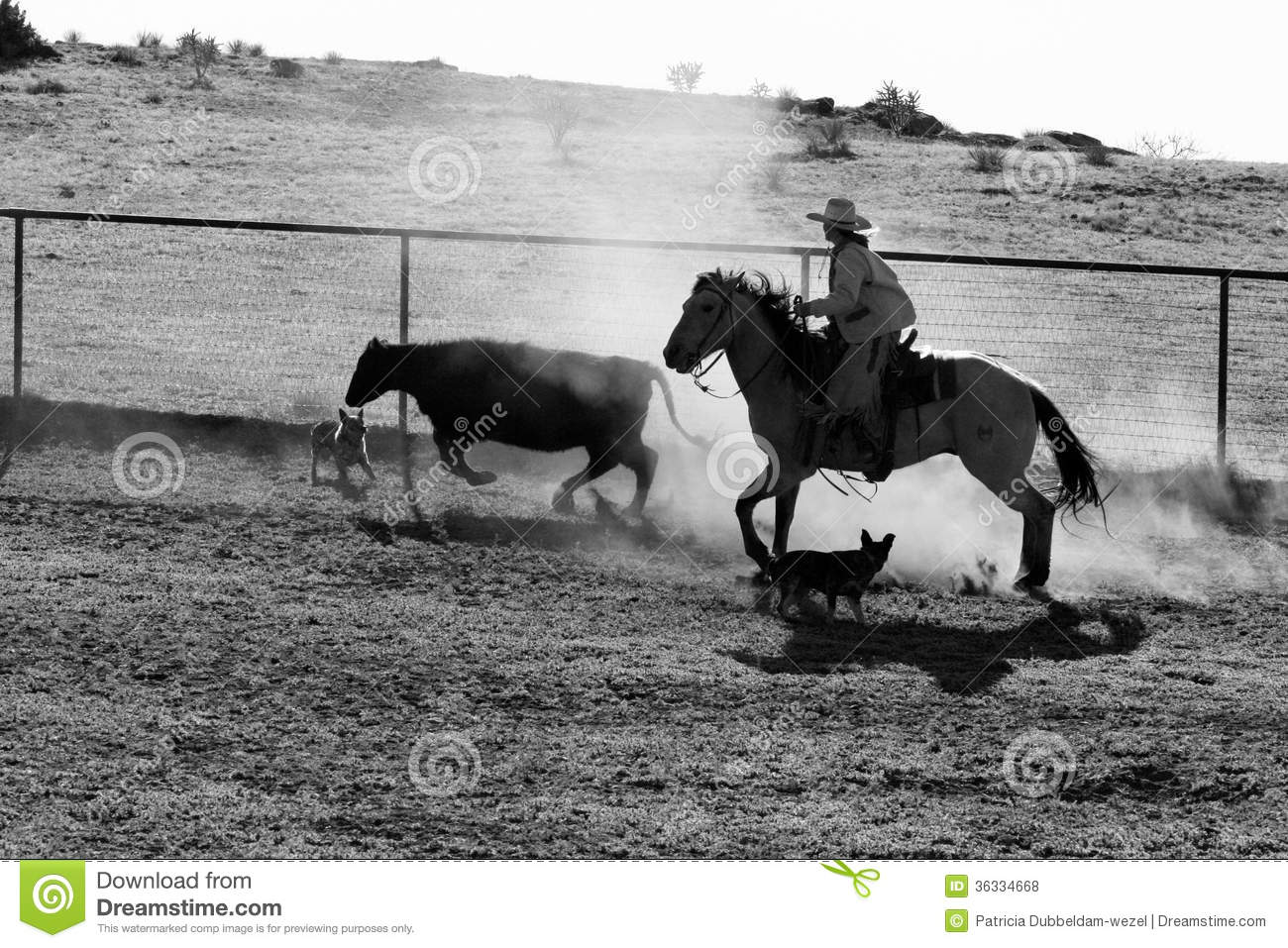 the life of a cowboy The cowboy is the archetypical character of the western, perhaps the quintessential american hero horrible histories had a musical number describing what the life of a working cowboy was actually like one episode of firefly has mal meeting some cattle buyers.