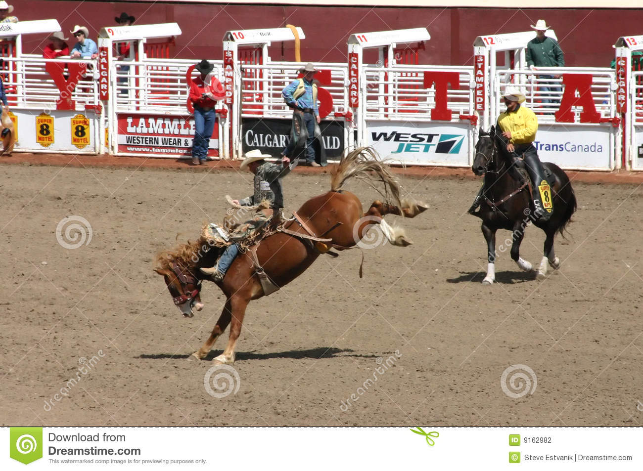 Cowboy Riding Bucking Bronco Editorial Photography Image