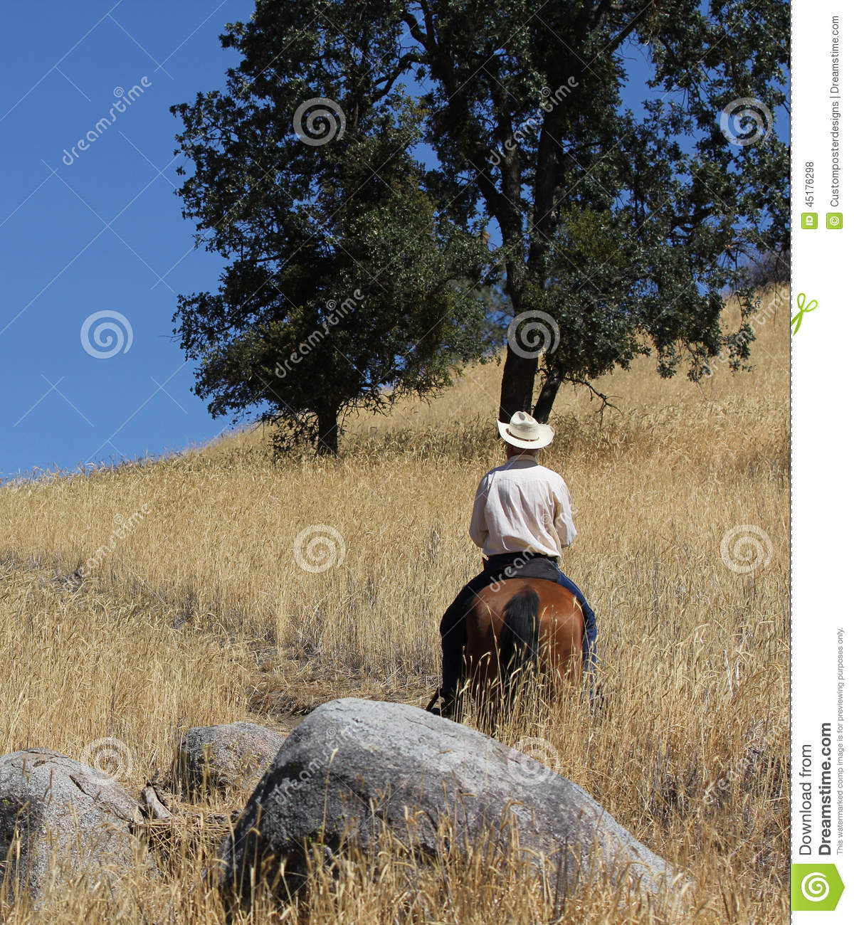 Download A Cowboy Riding In A Field With Trees Up A Mountain Trail Stock Photo - Image of cowboy, activity: 45176298