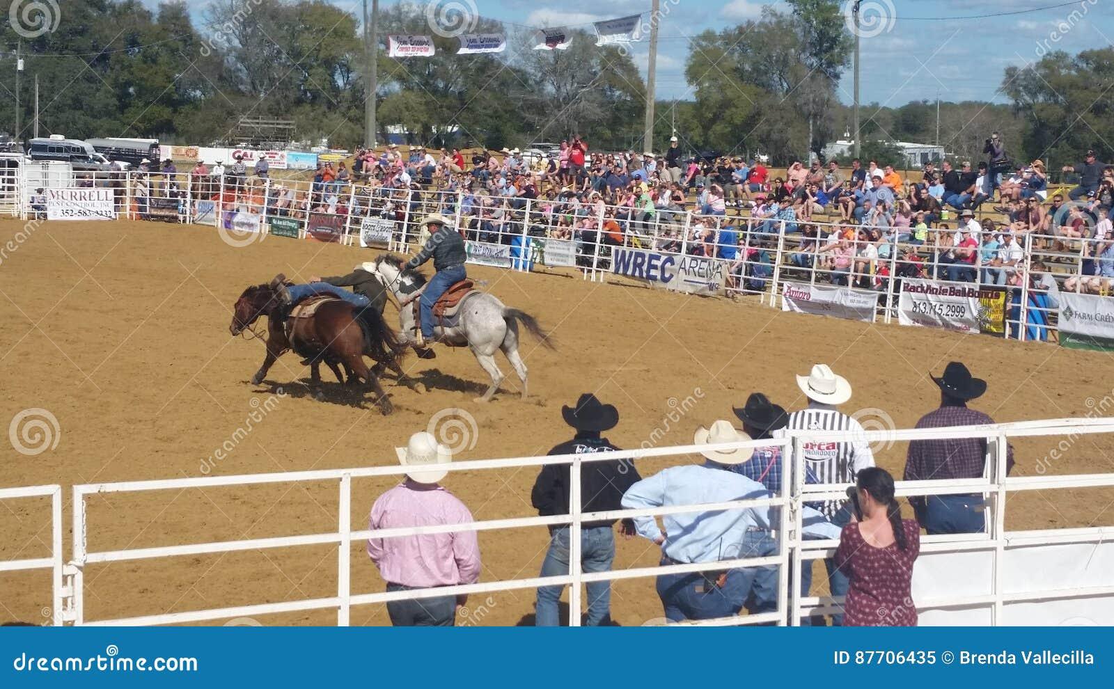 Cowboy sur le cheval