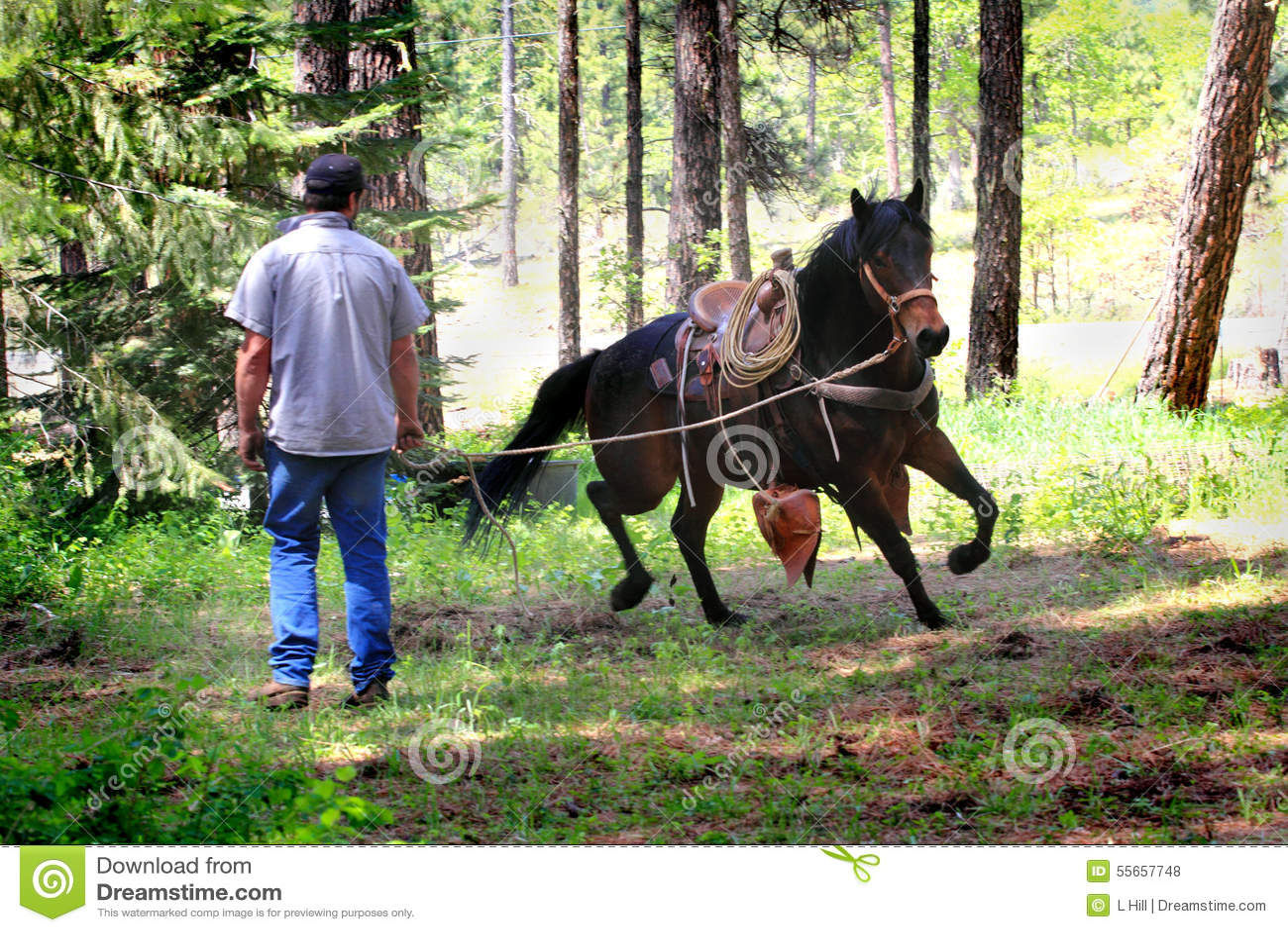 Cowboy Working Running Horse