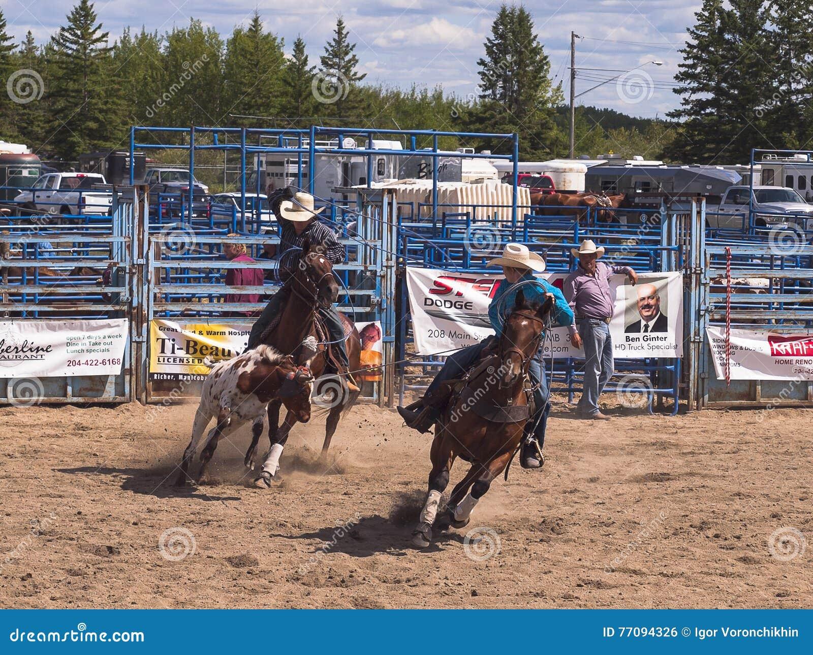 Cowboyes som försöker till unga Angus lasso