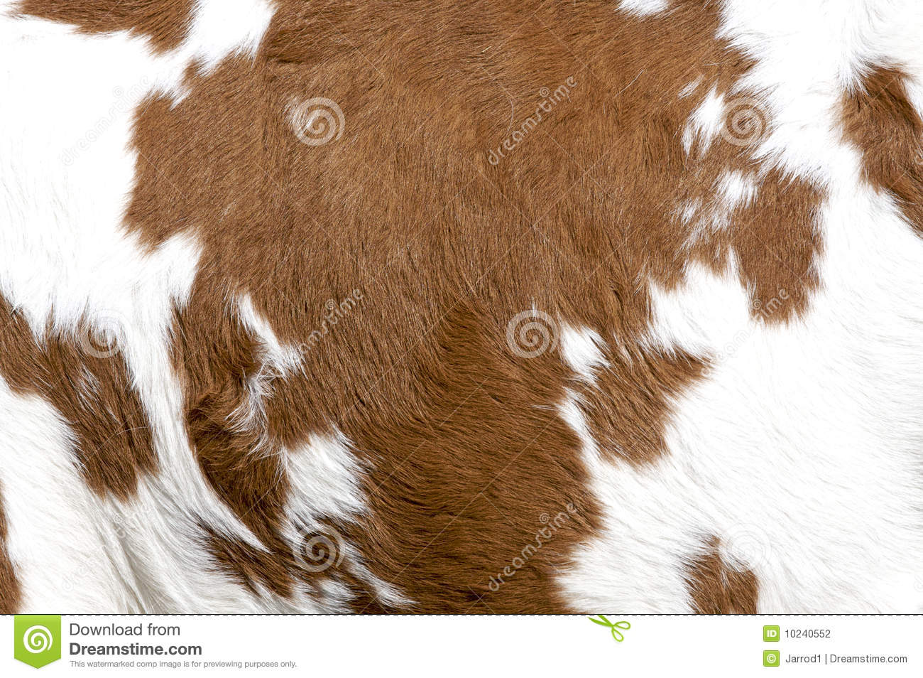 Cowhide Stock Photography Image 10240552