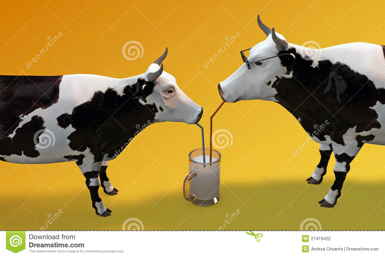 Cows drinking milk