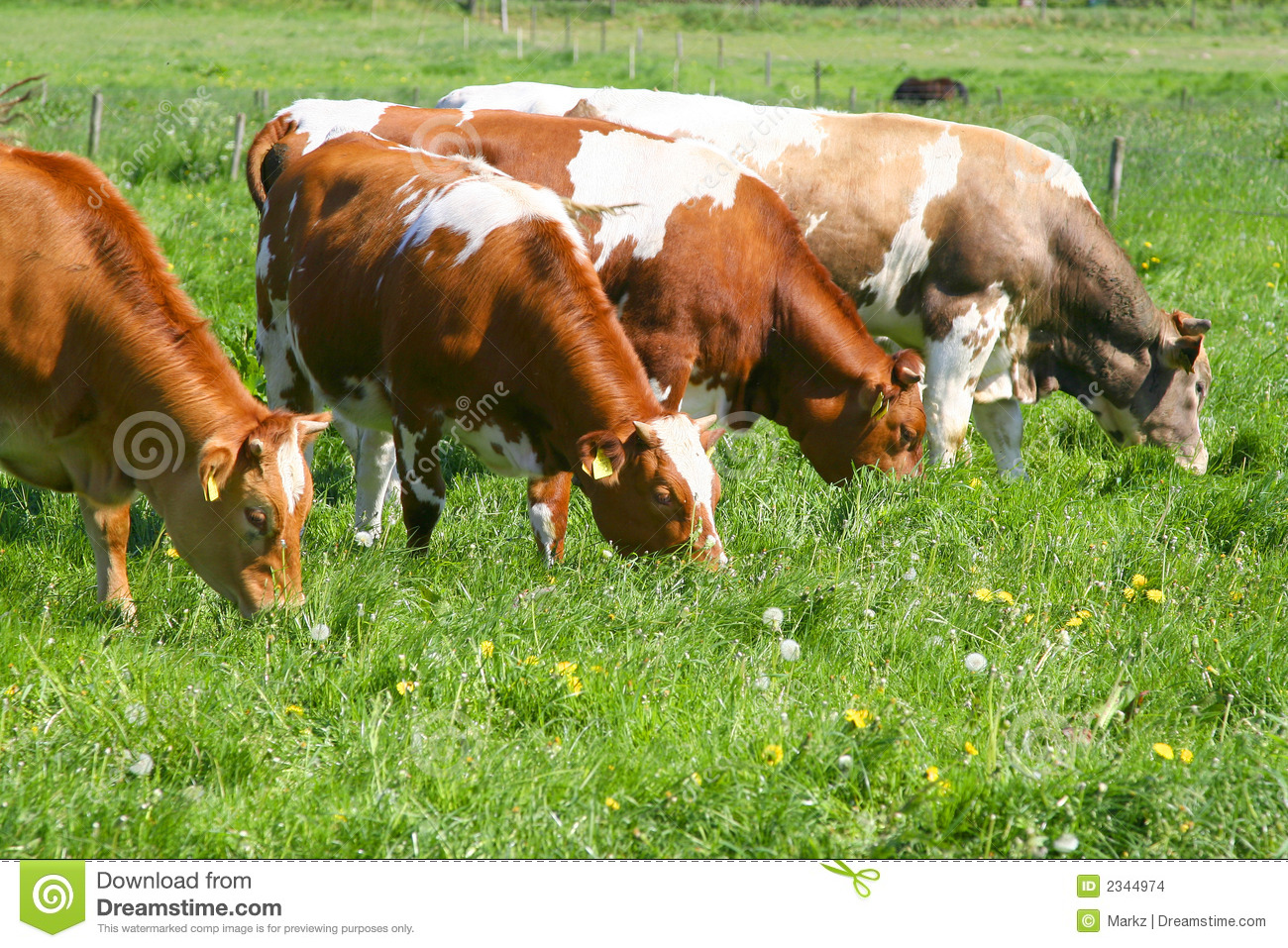 cows eating grass stock images image 2344974 Cow Eating Grass SVG Cow Clip Art Basic