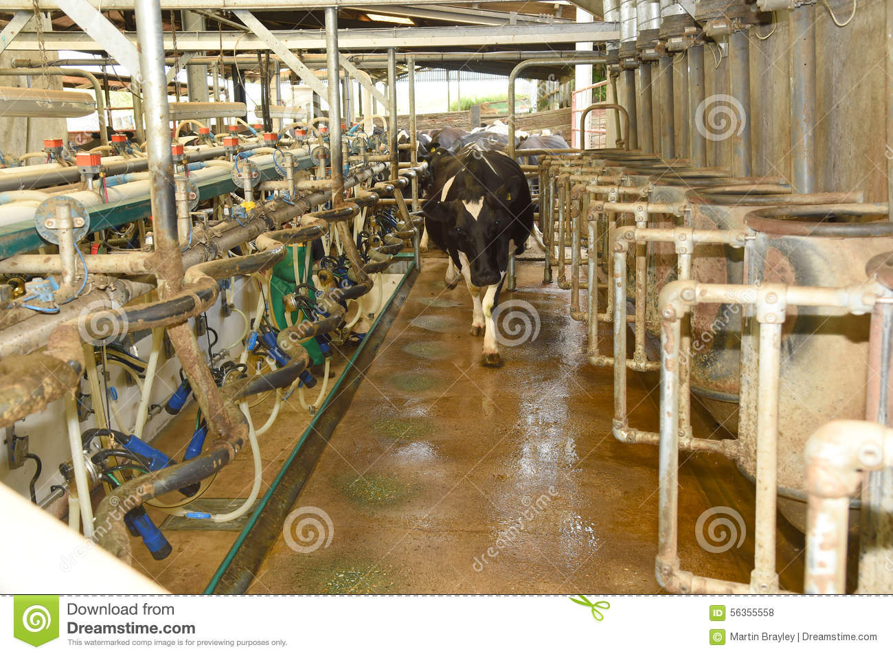^ Dairy Farm Shed Plans In India. ourtesy hehinducom. Palruf ow ...