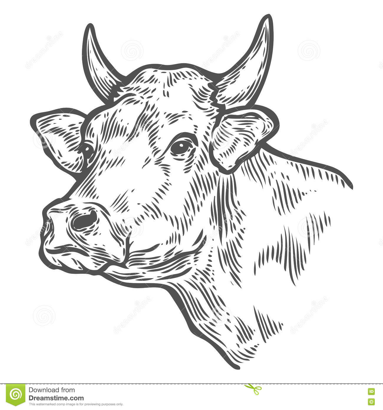 Cows Head. Hand Drawn Sketch In A Graphic Style. Vintage