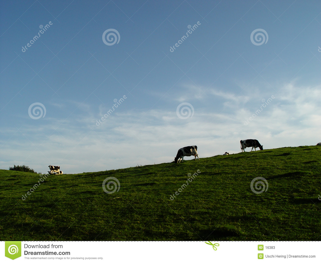 cows, meadow, sky