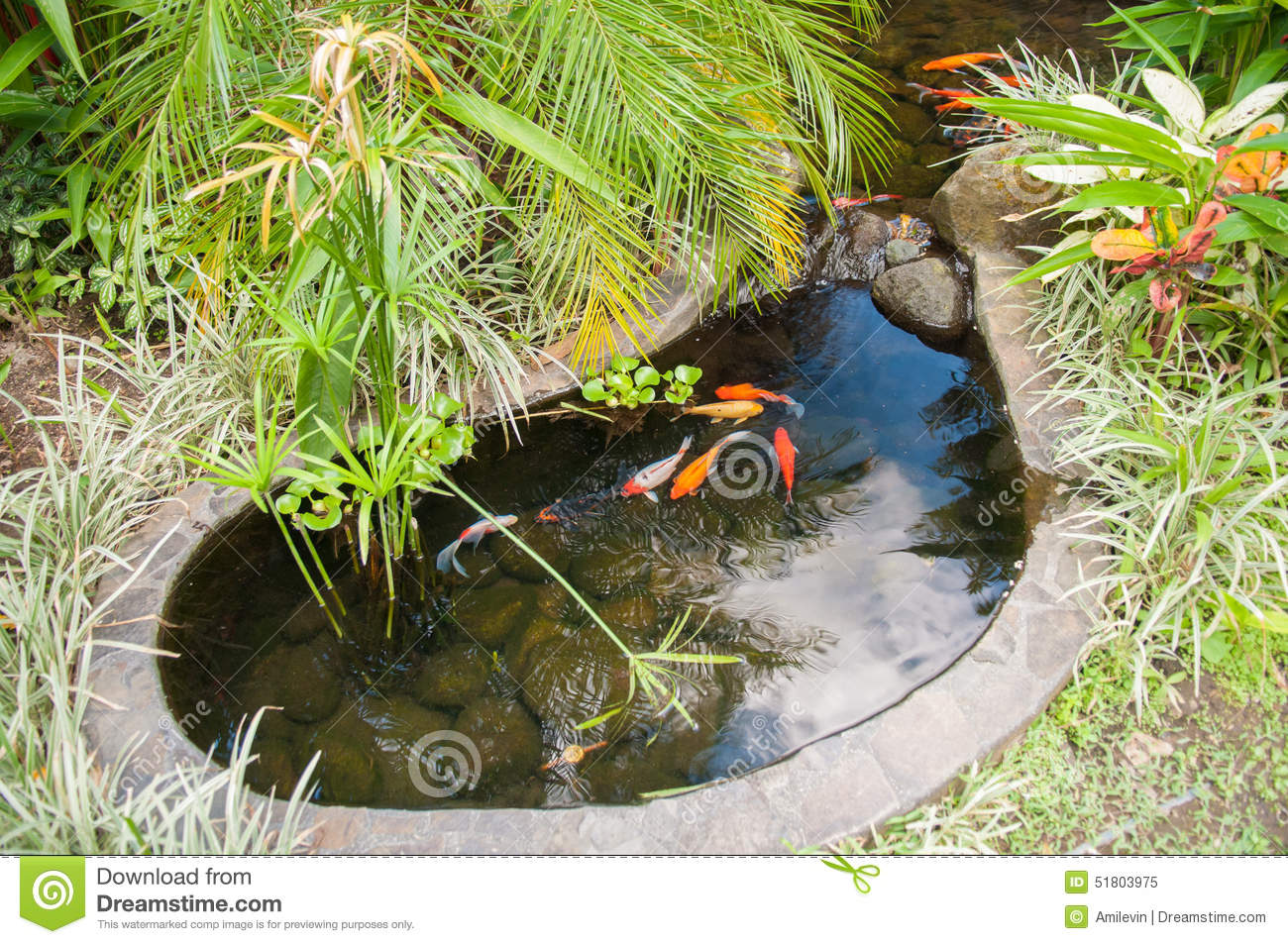 Coy pond stock image image of fish water surrounding for Small goldfish pond