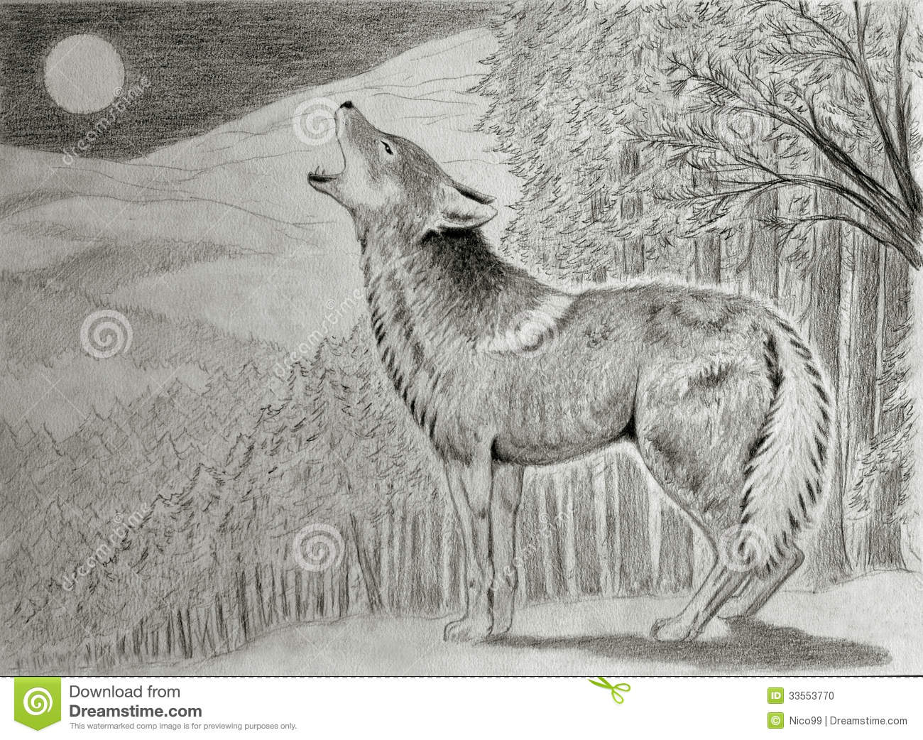 Coyote howling at the moon stock illustration ...  Coyote howling ...