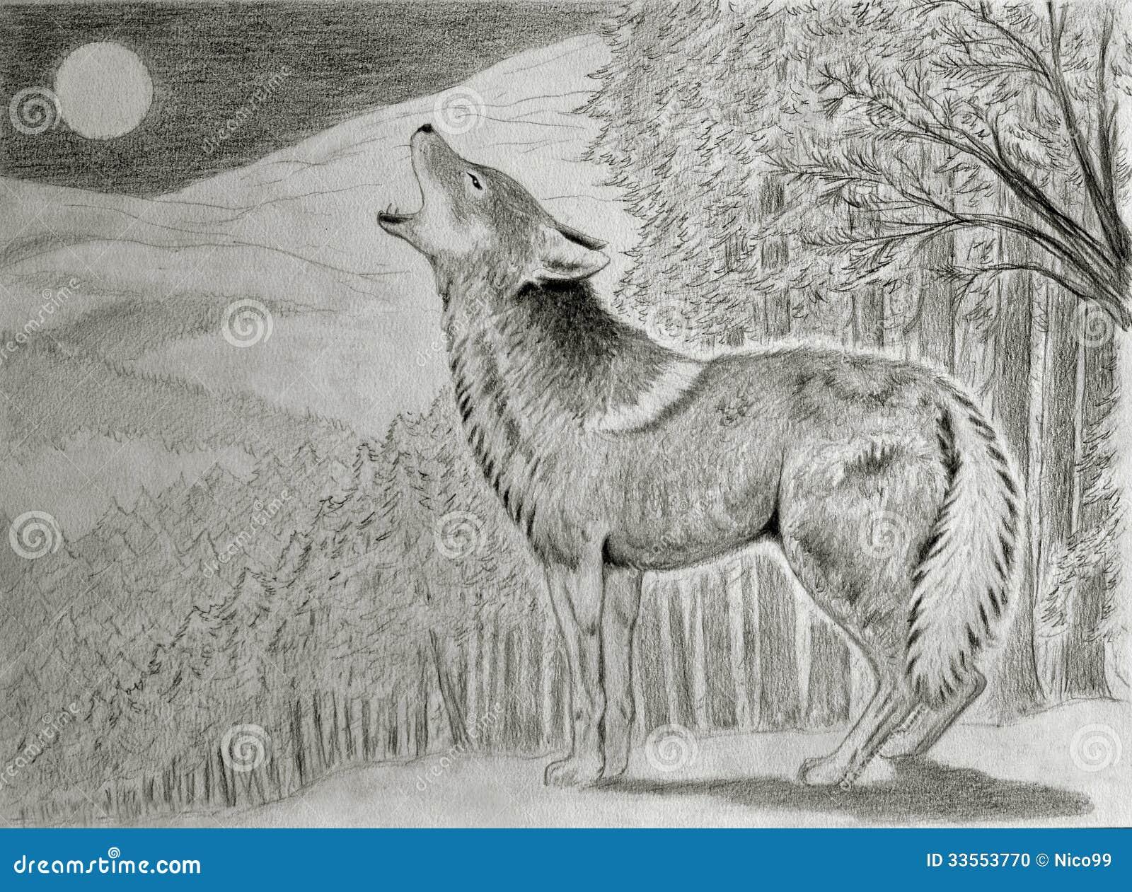 coyote howling at the moon stock illustration illustration of predator 33553770. Black Bedroom Furniture Sets. Home Design Ideas