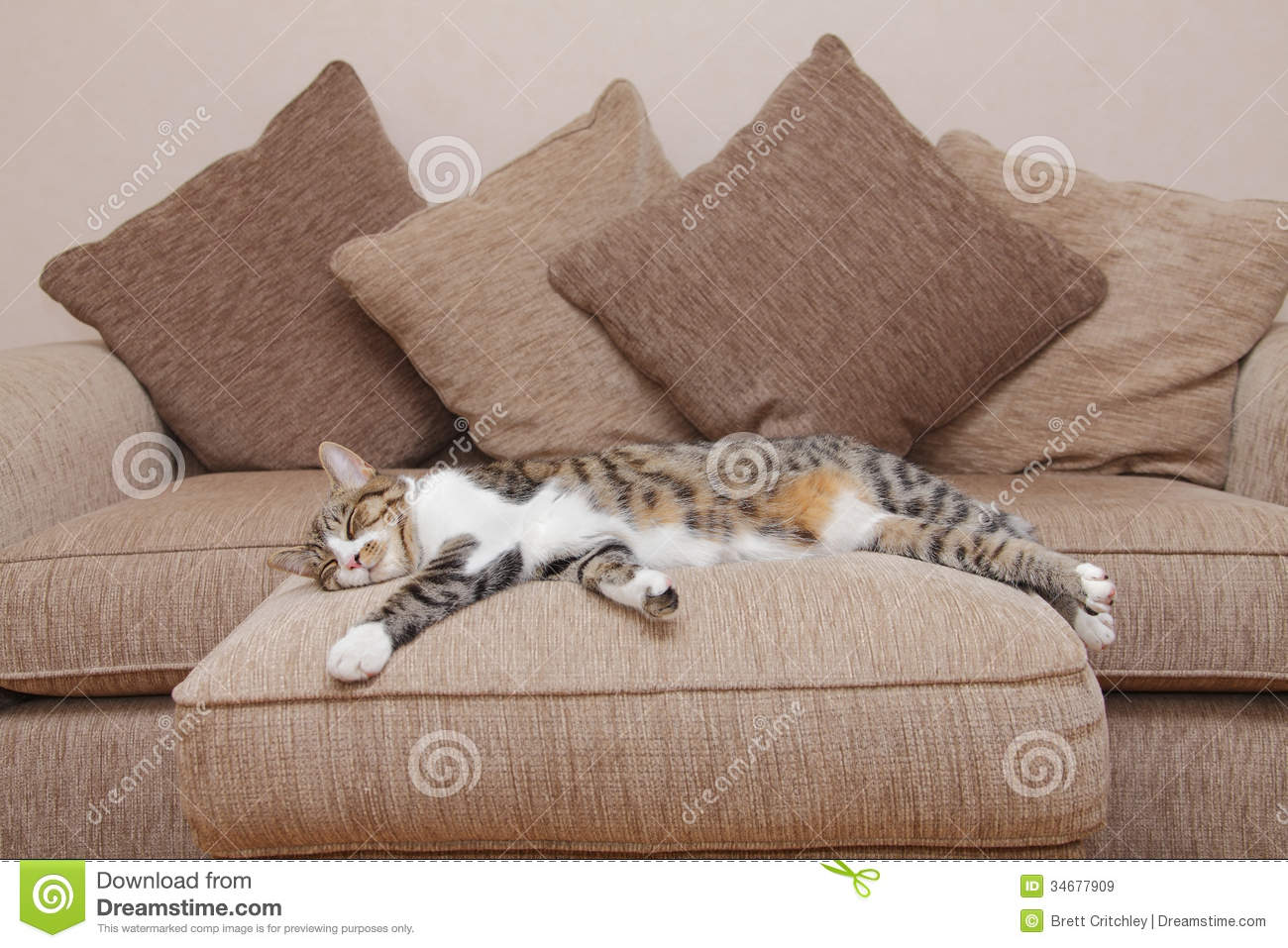 Cozy couch cat stock image image of cozy sofa feline - Sofas para gatos ...