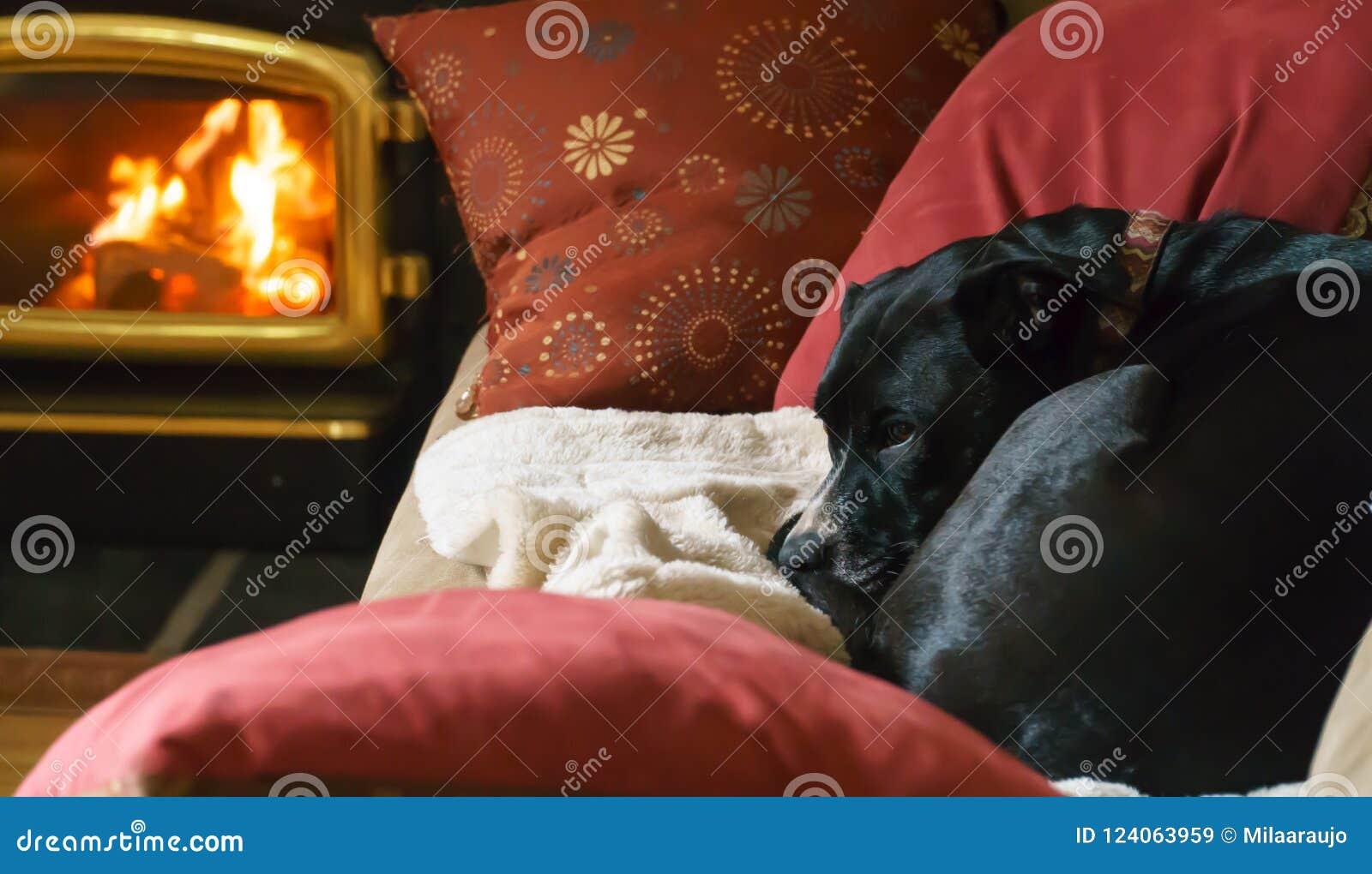 cozy dog near fireplace stock image image of happy 124063959 rh dreamstime com Cozy Fireplace Scene Cozy Fire