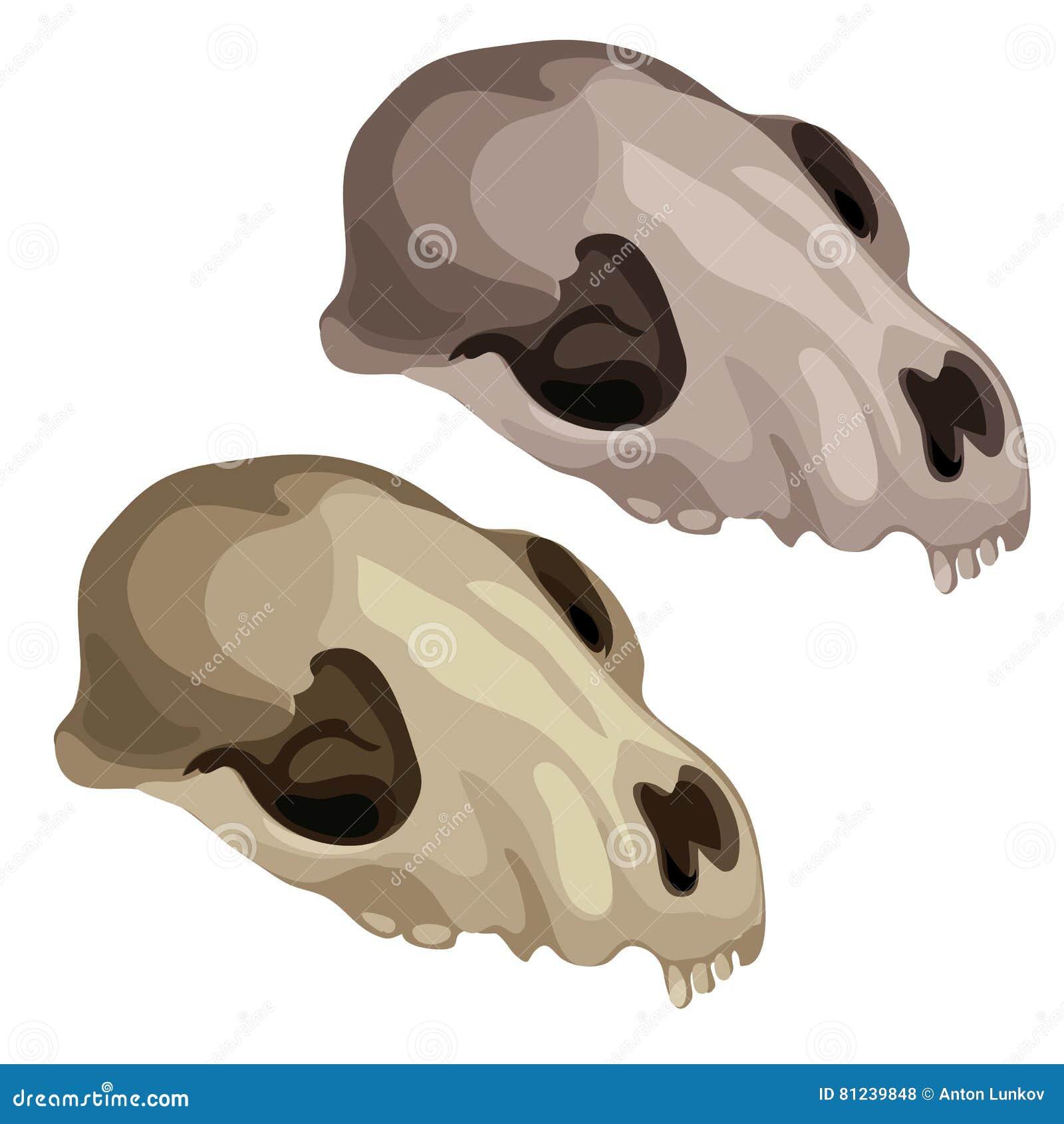 Cráneo antiguo de un animal prehistórico Vector