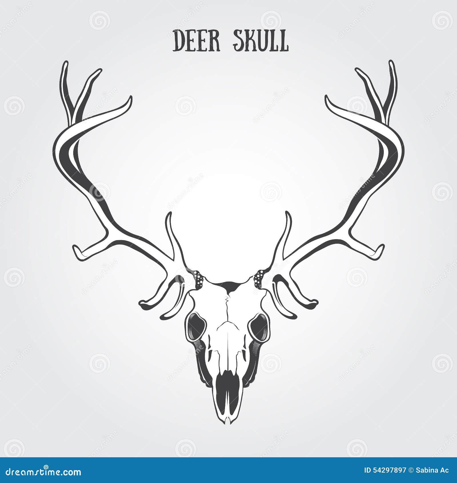 Cráneo de los ciervos ilustración del vector. Ilustración de ...