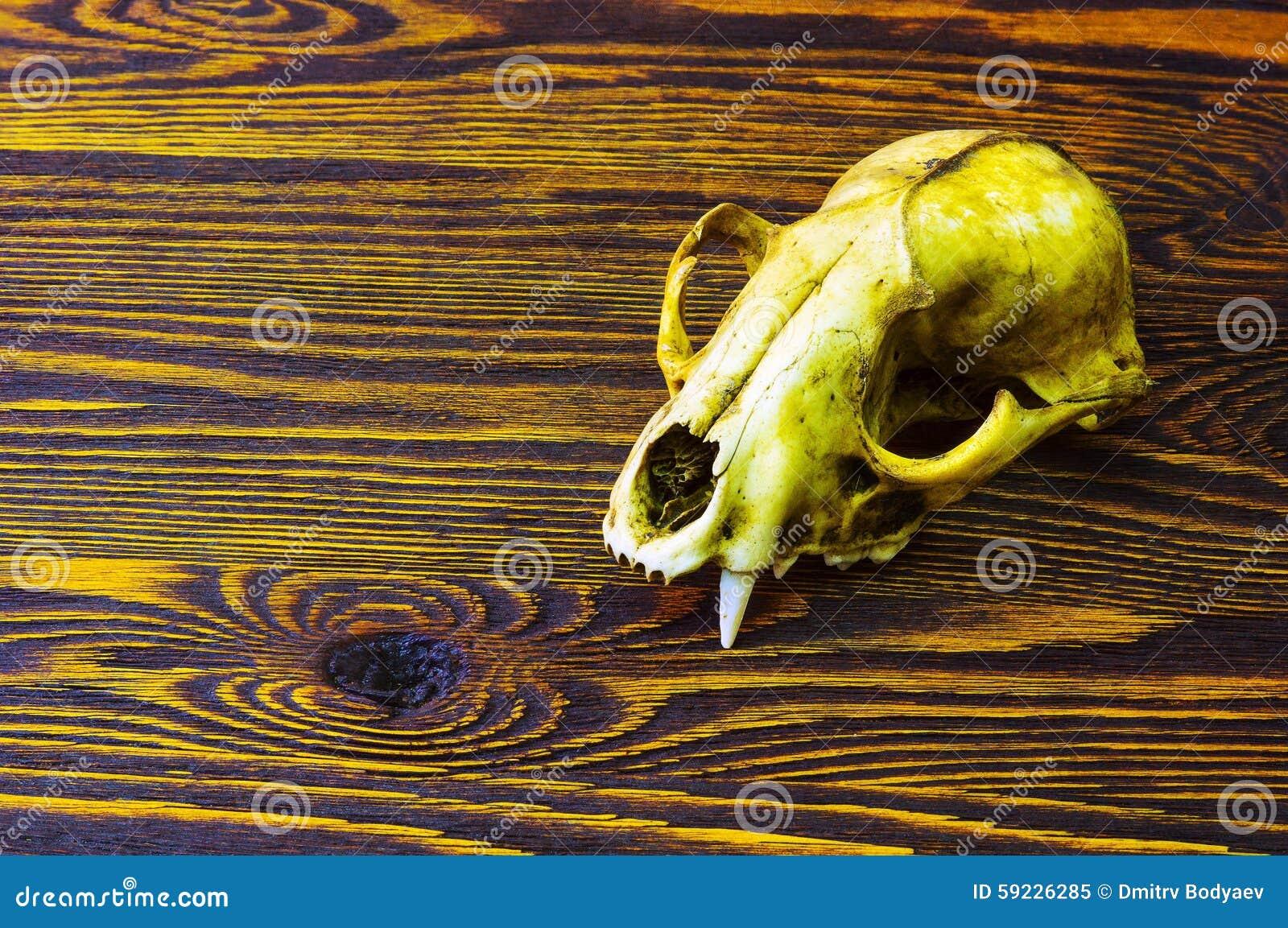 Cráneo de un animal en una tabla de madera