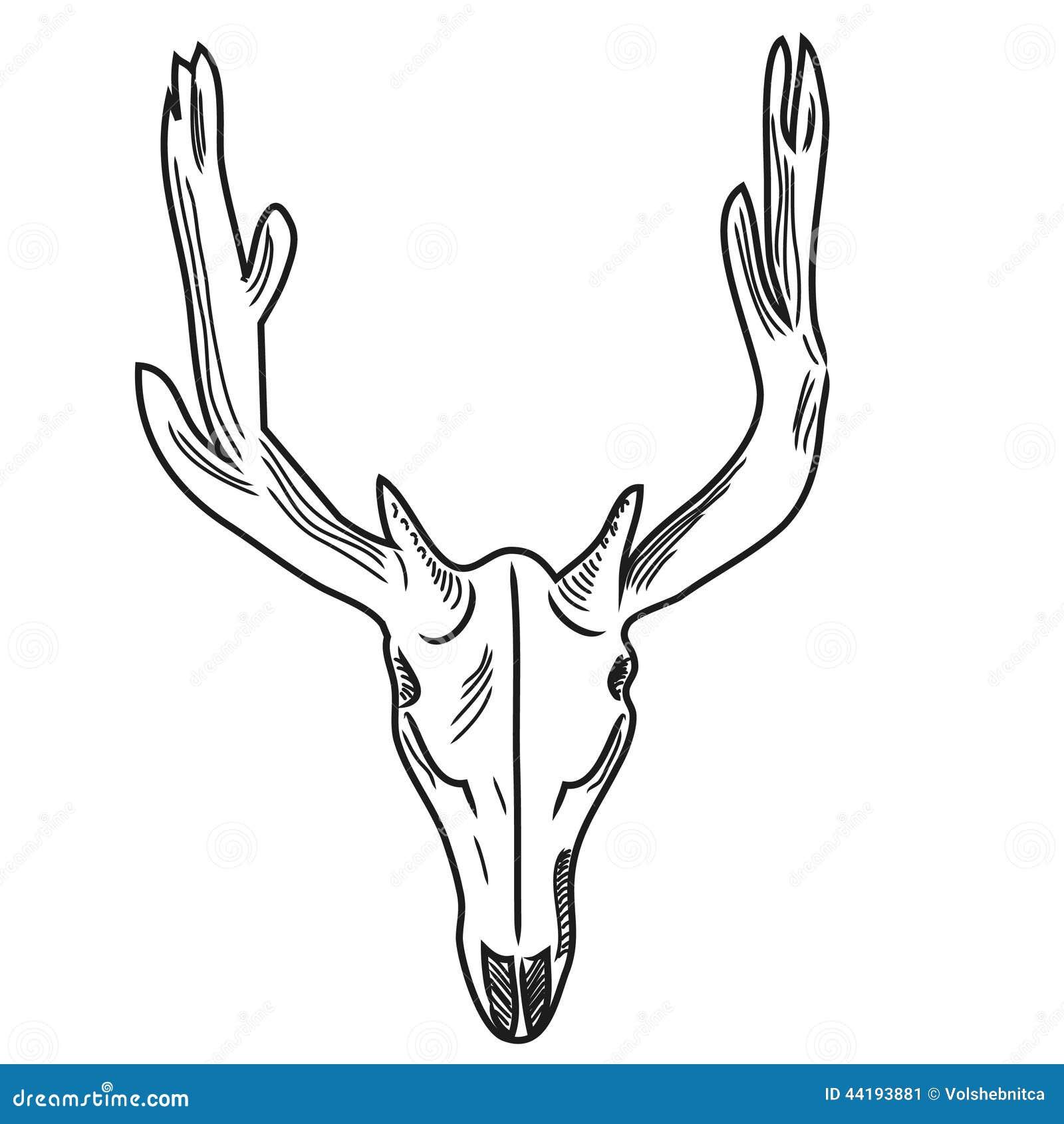 Cráneo de un ciervo ilustración del vector. Ilustración de drenaje ...