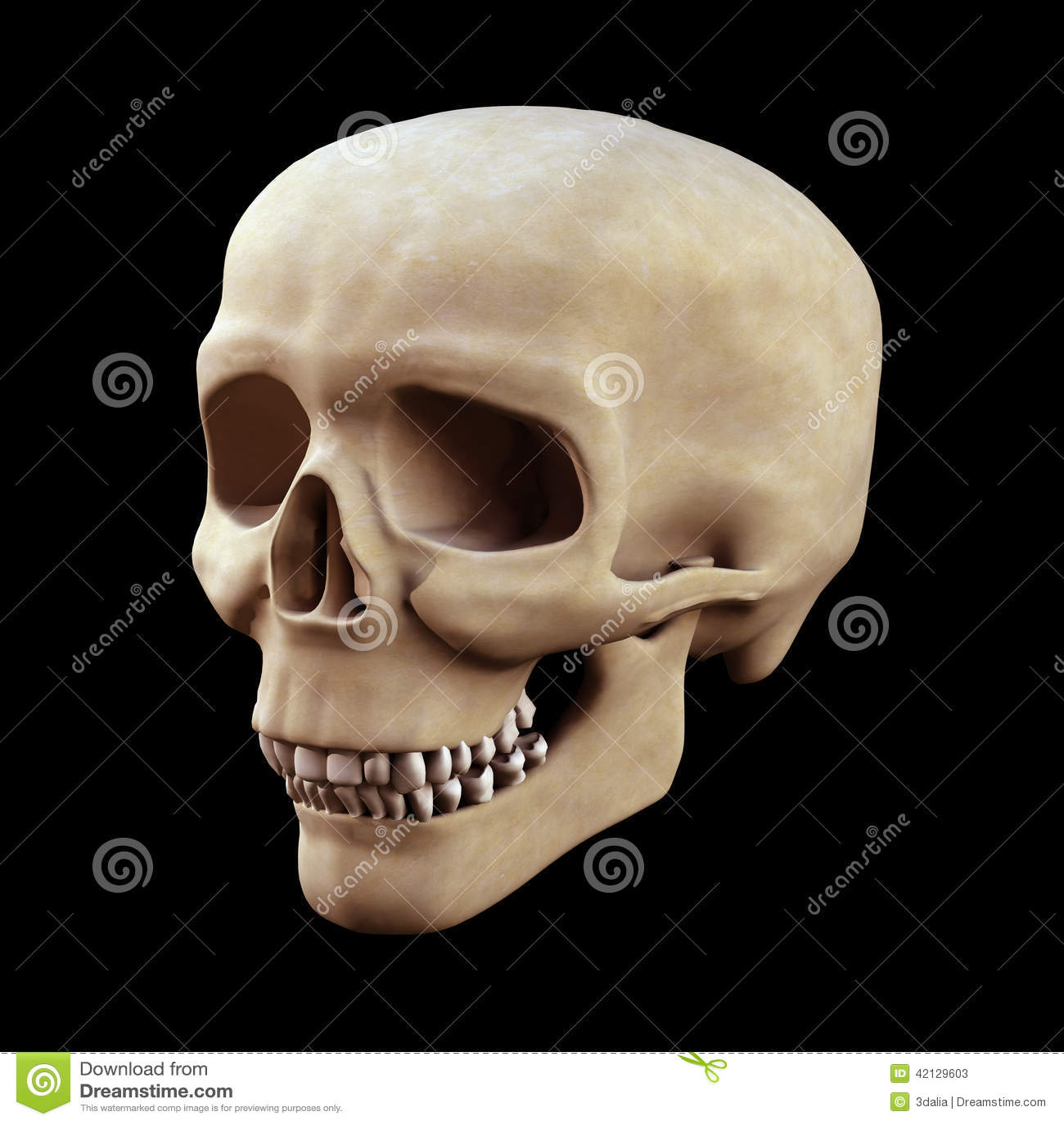 Cráneo del ser humano 3d imagen de archivo. Imagen de fisiología ...