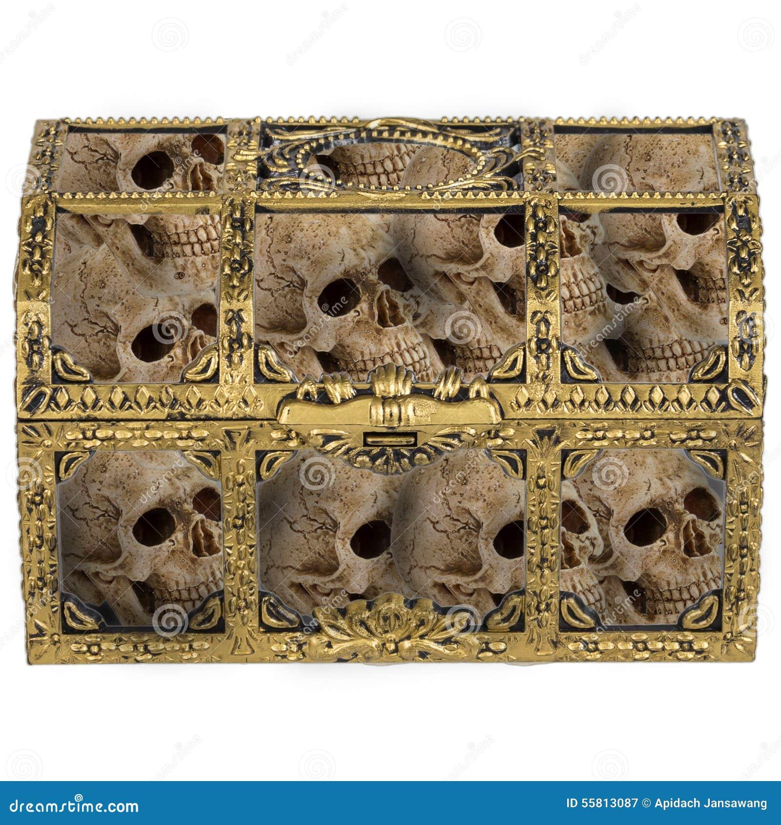 Cráneo Del Ser Humano Del Pecho Imagen De Archivo Imagen De Humano