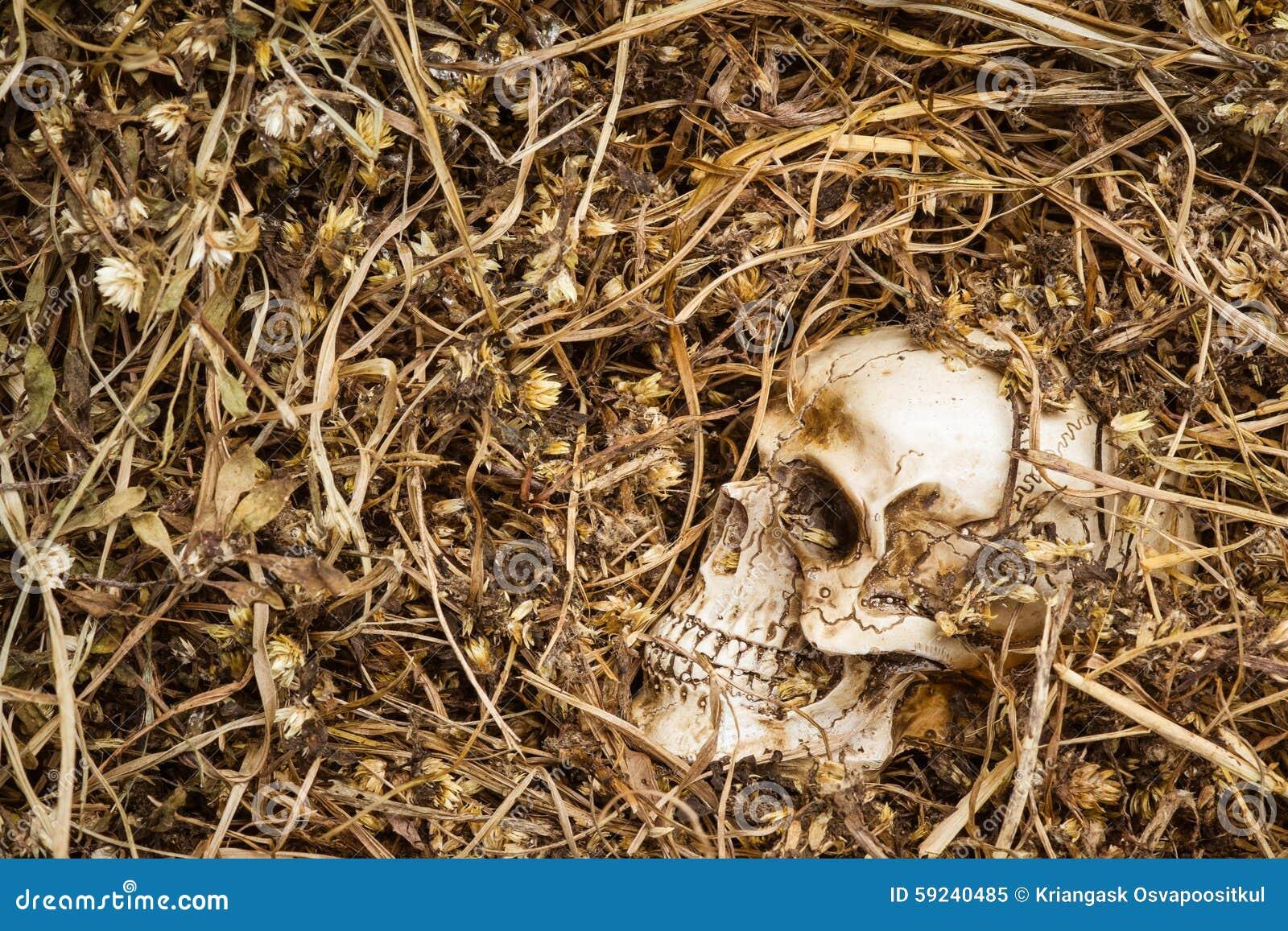Cráneo en hierba secada