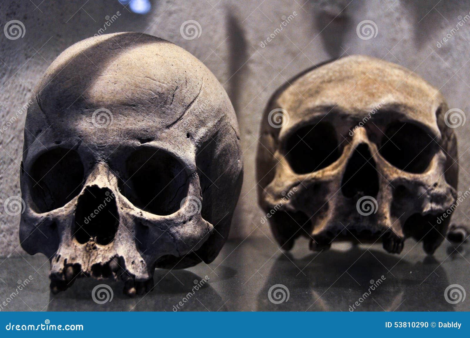 Cráneo humano foto de archivo. Imagen de ciencia, huesos - 53810290