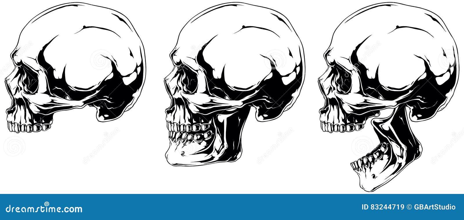 Cráneo Humano Blanco En Sistema De La Proyección Del Perfil ...