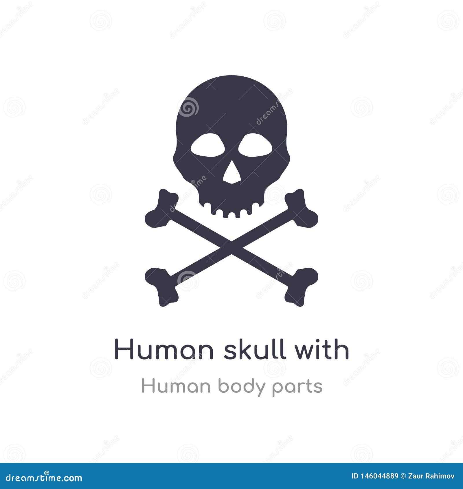 Cráneo humano con el icono cruzado del esquema de los huesos l?nea aislada ejemplo del vector de la colecci?n humana de las parte