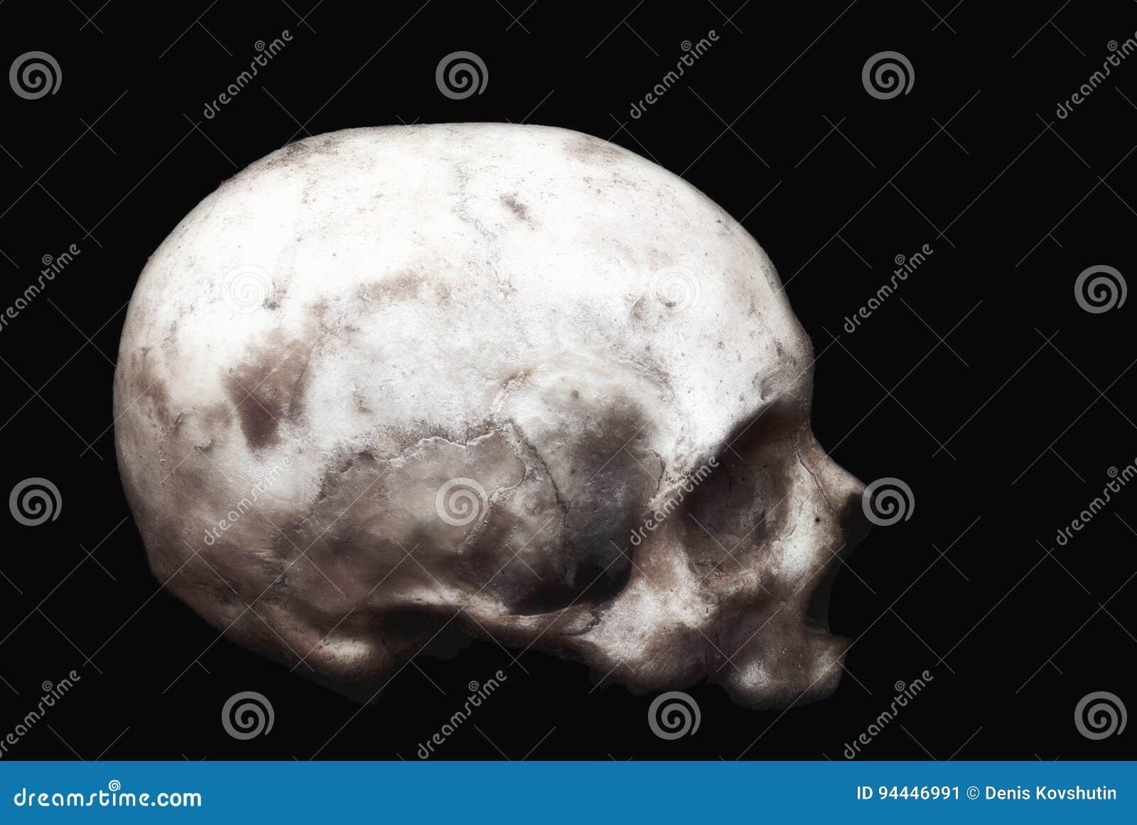 Cráneo Humano Real En Un Fondo Negro Aislado Imagen de archivo ...