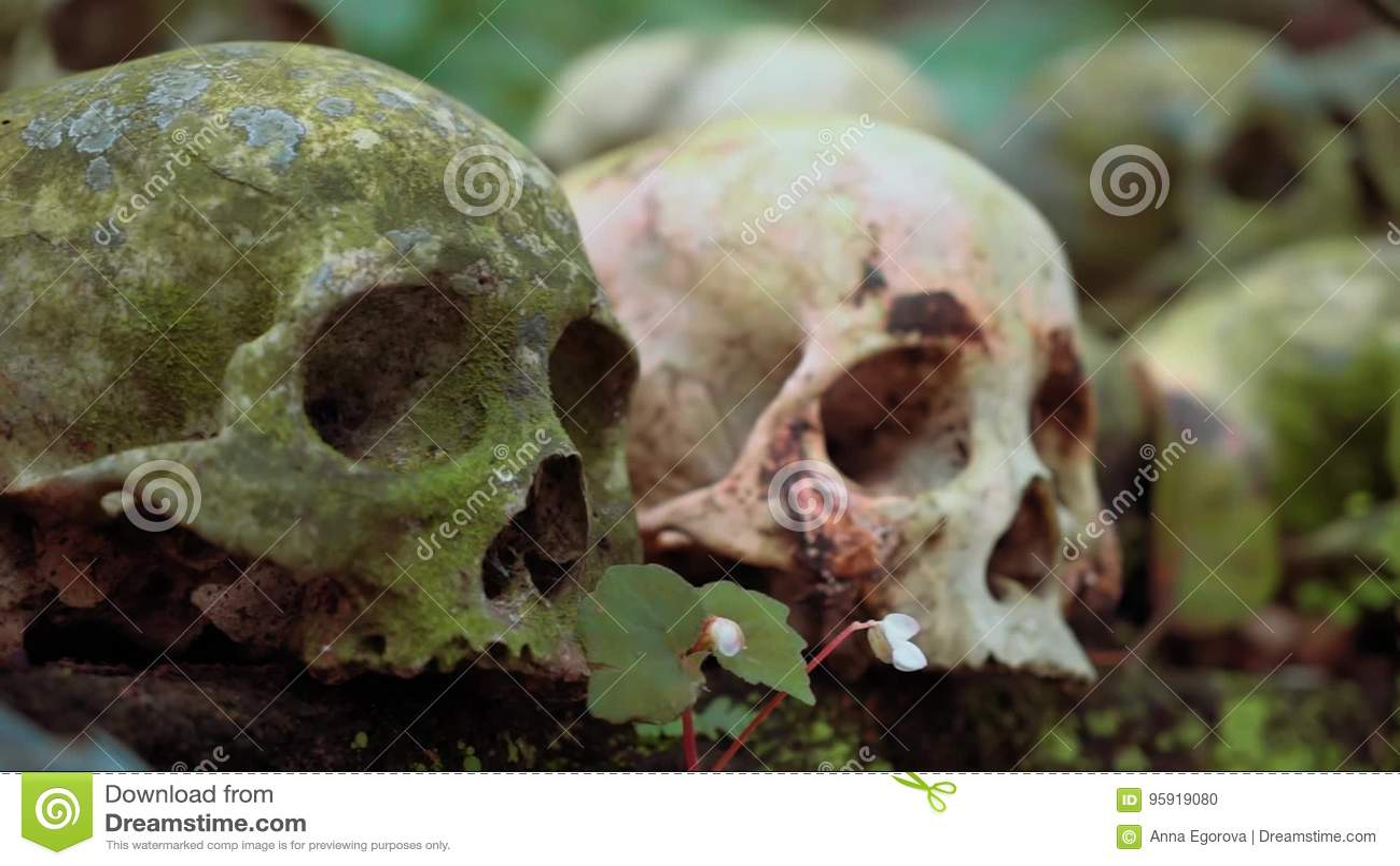 Cráneo Humano Rosado Fresco En Fila De Cráneos Verdes Cubiertos De ...