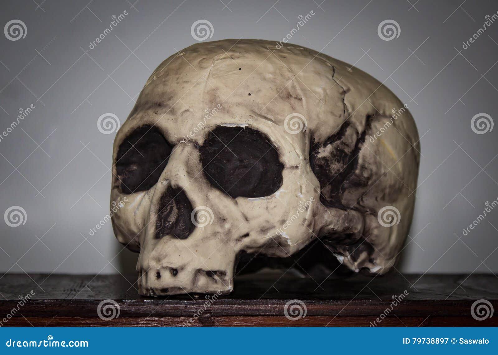 Cráneo plástico