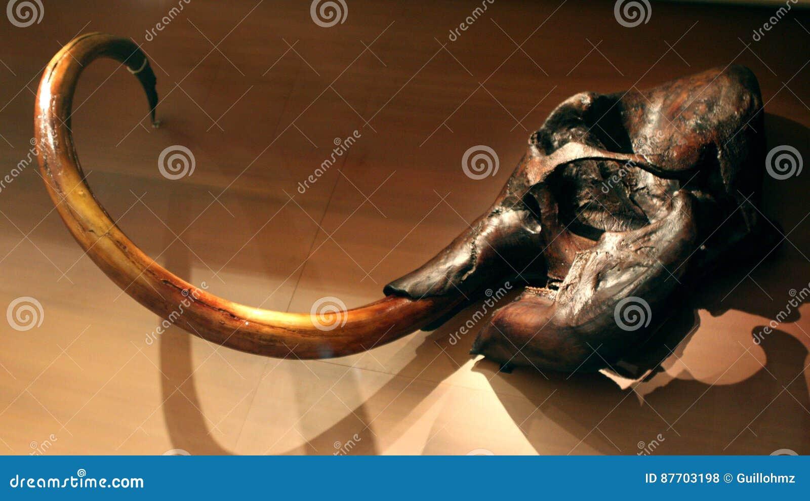 Crâne et horne gigantesques
