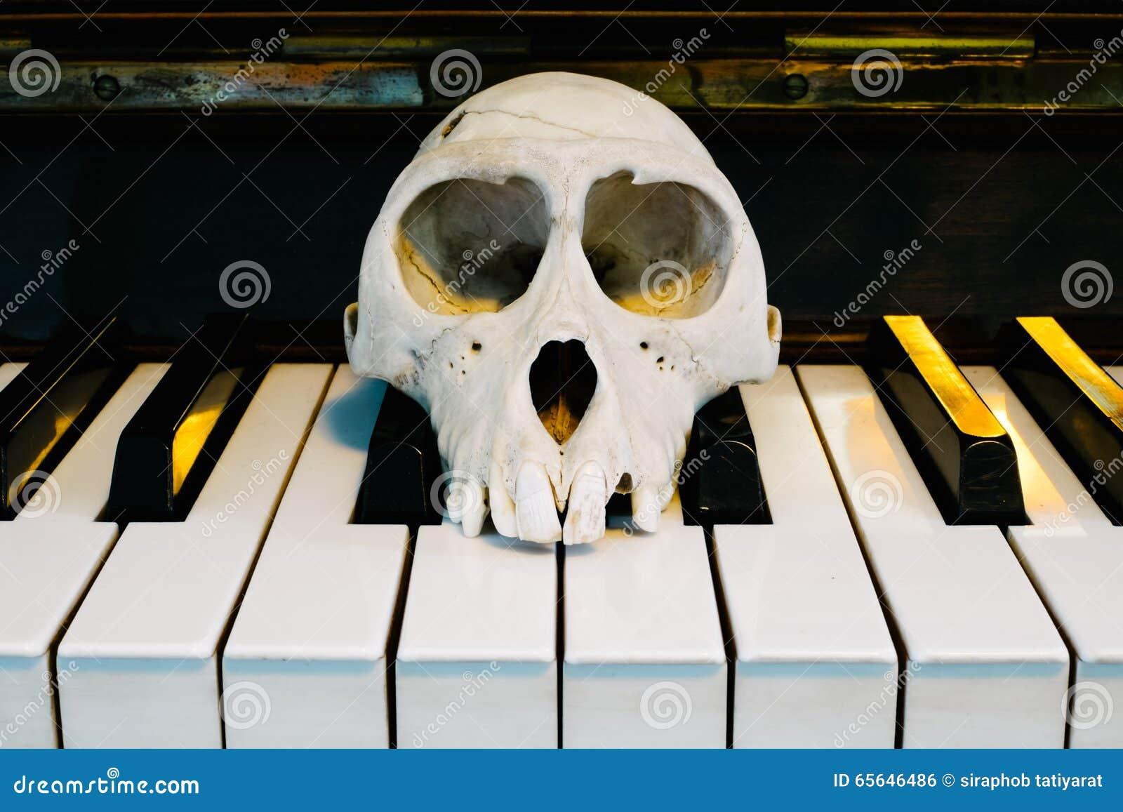 Crânes de singe sur le piano