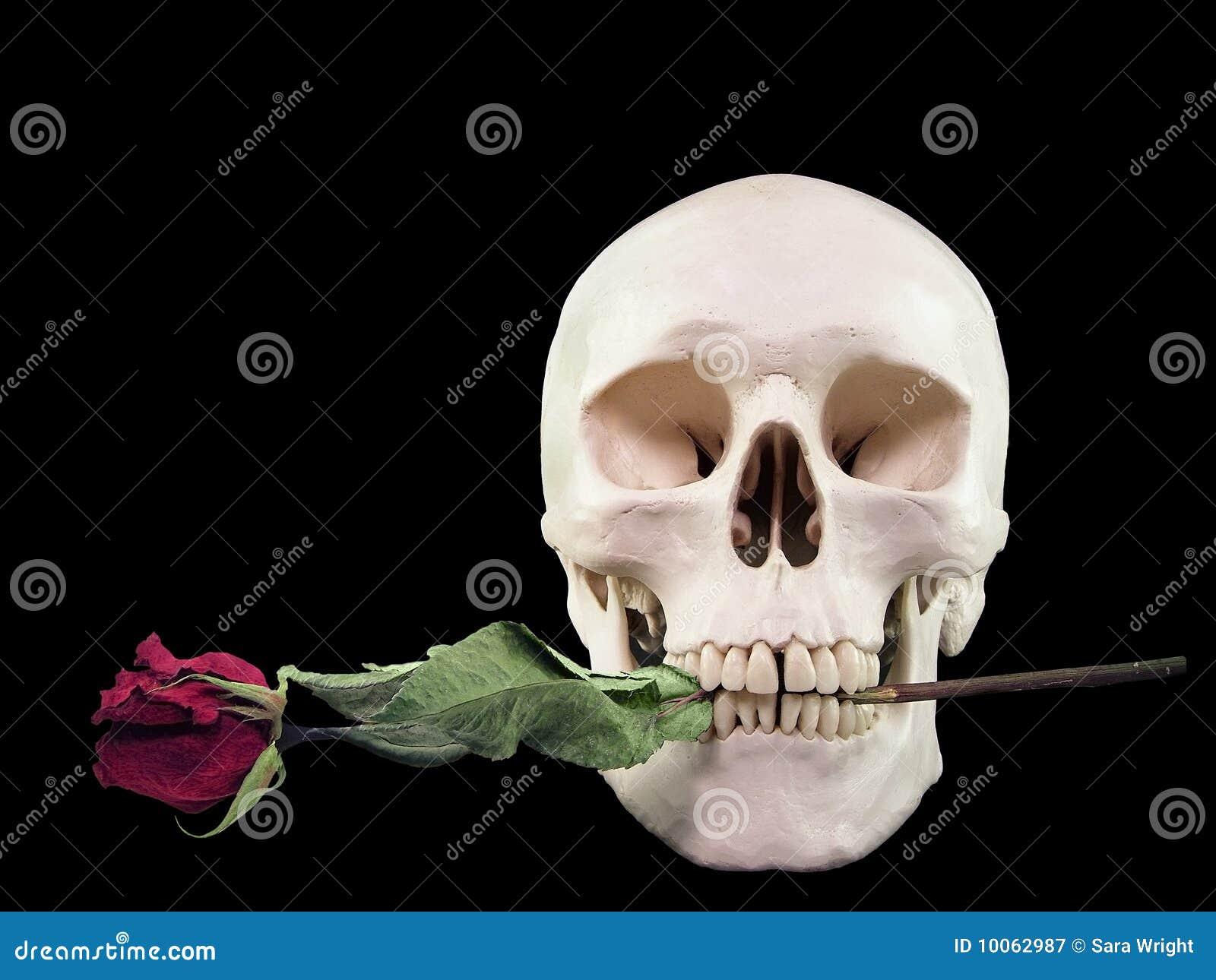 Crânio com Rosa