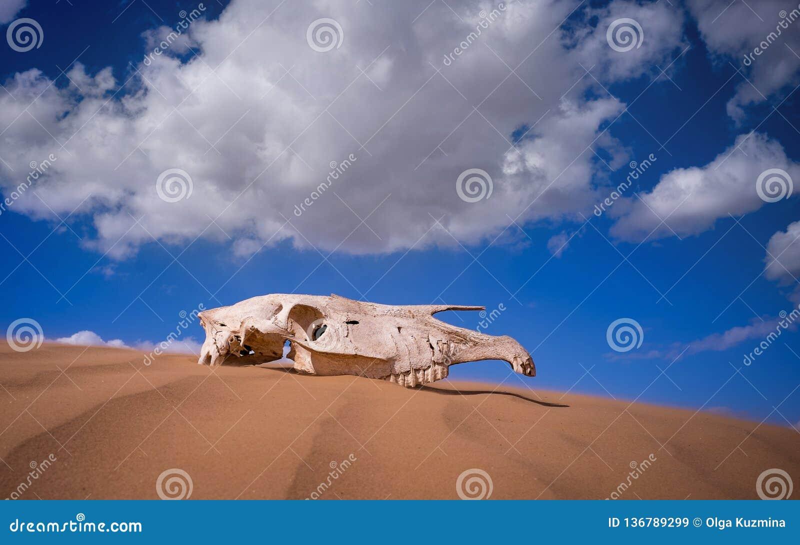 Crânio de Saiga no deserto animais do livro vermelho Dia ensolarado