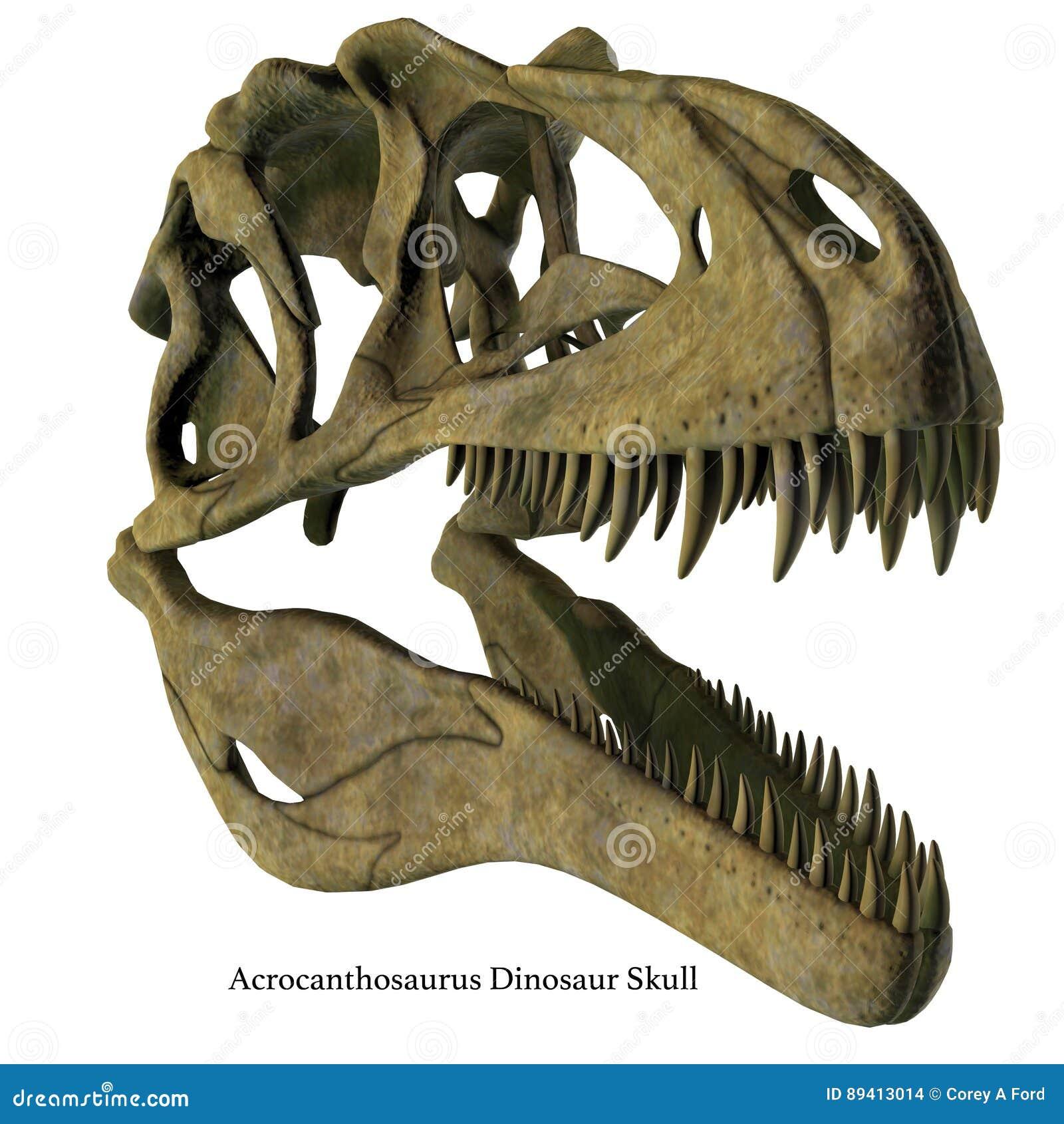 Crânio do Acrocanthosaurus com fonte