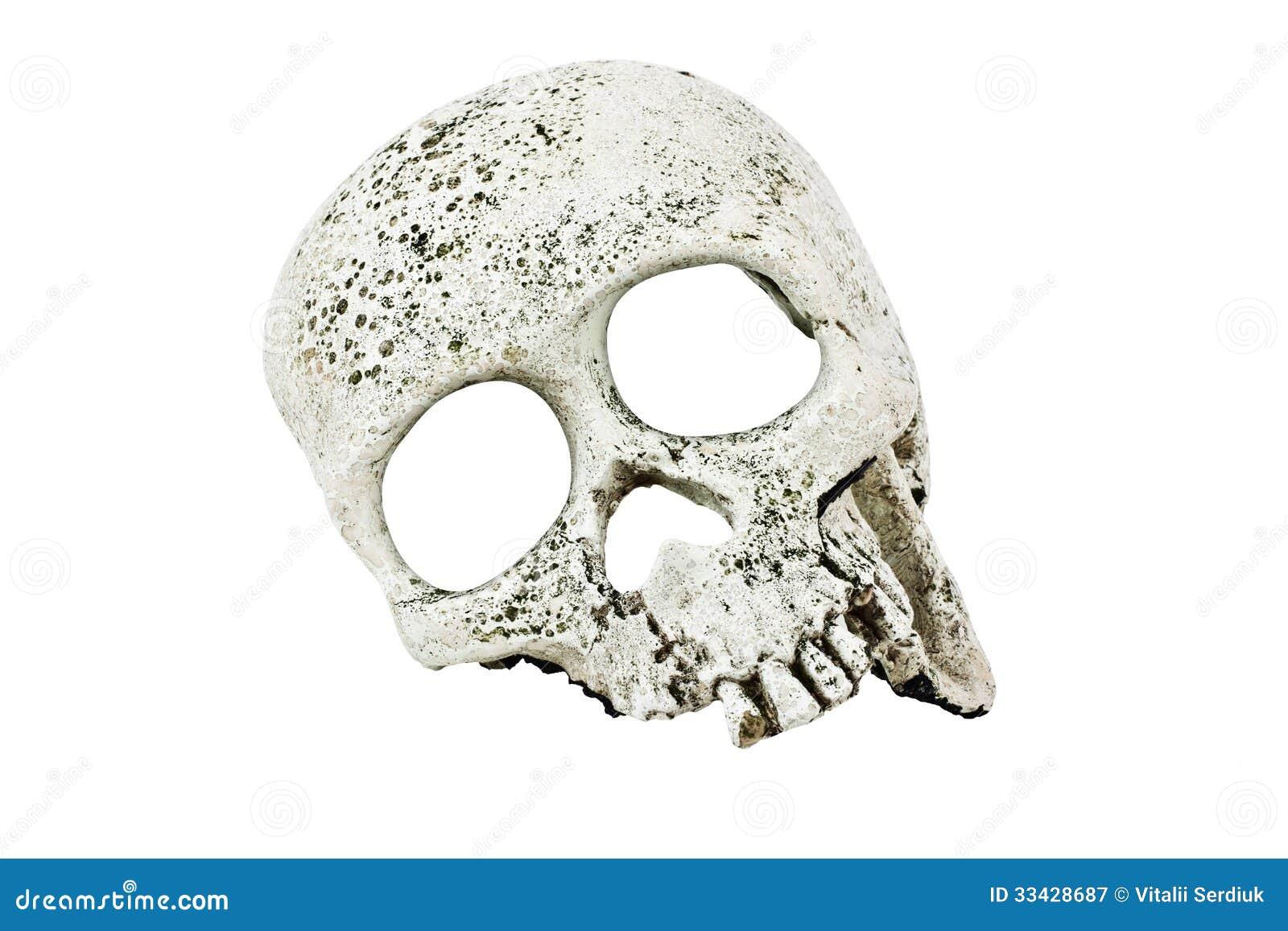 Crânio do close-up da pessoa em um fundo branco