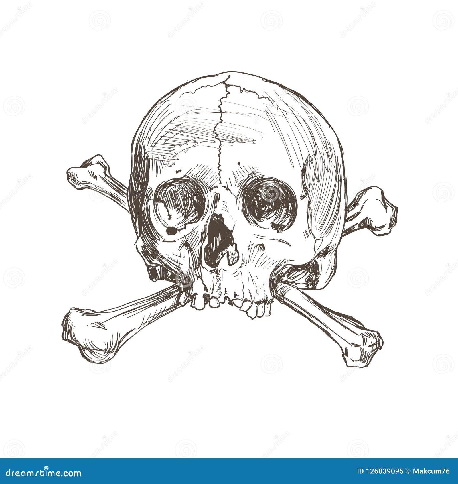 Cranio E Ossos Do Desenho Da Mao Ilustracao Do Vetor Ilustracao