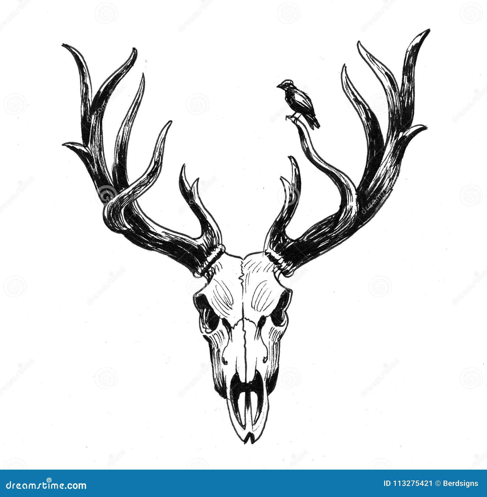 Crânio e pássaro dos cervos