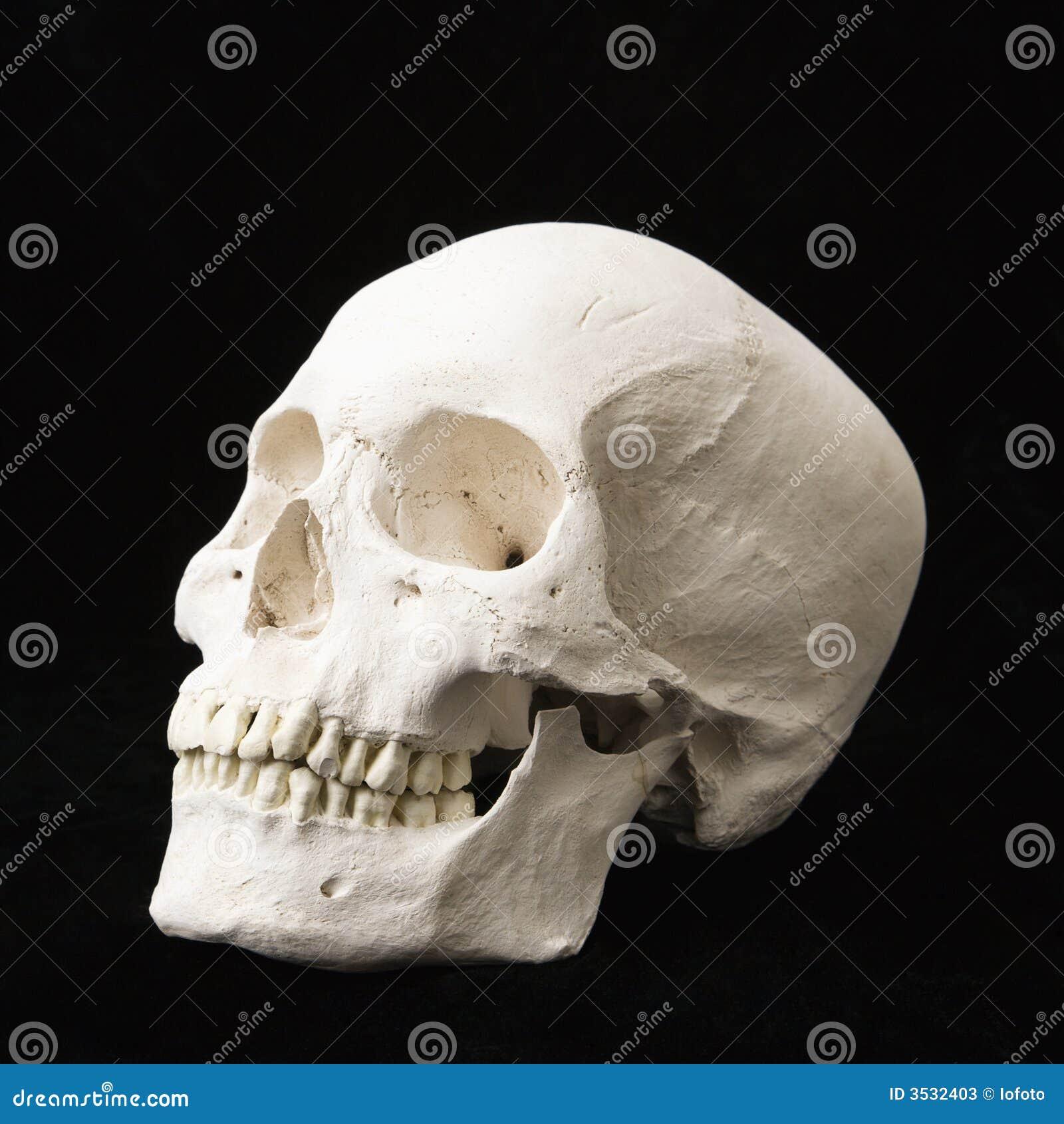 Crânio humano.