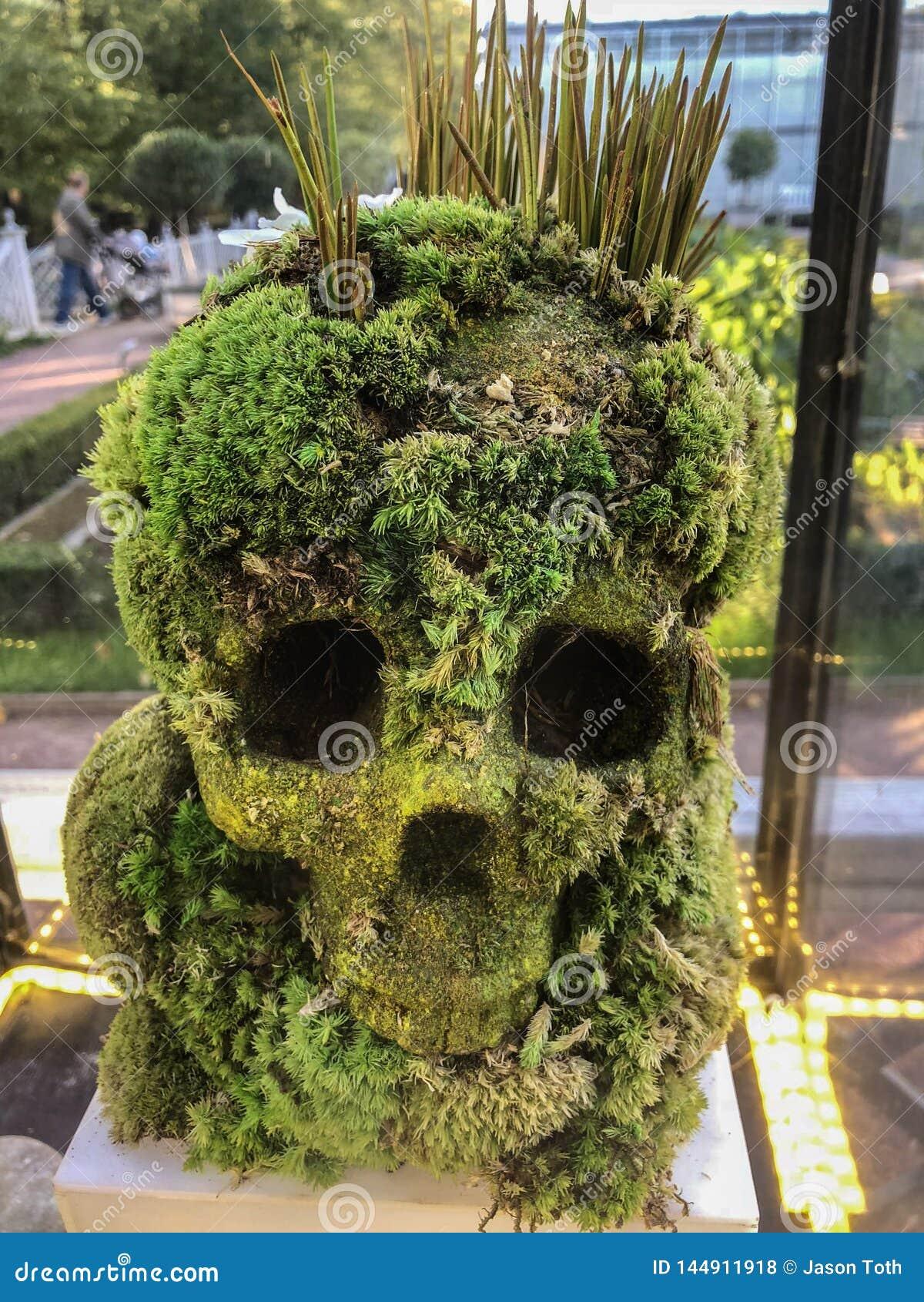 Crânio humano feito das plantas
