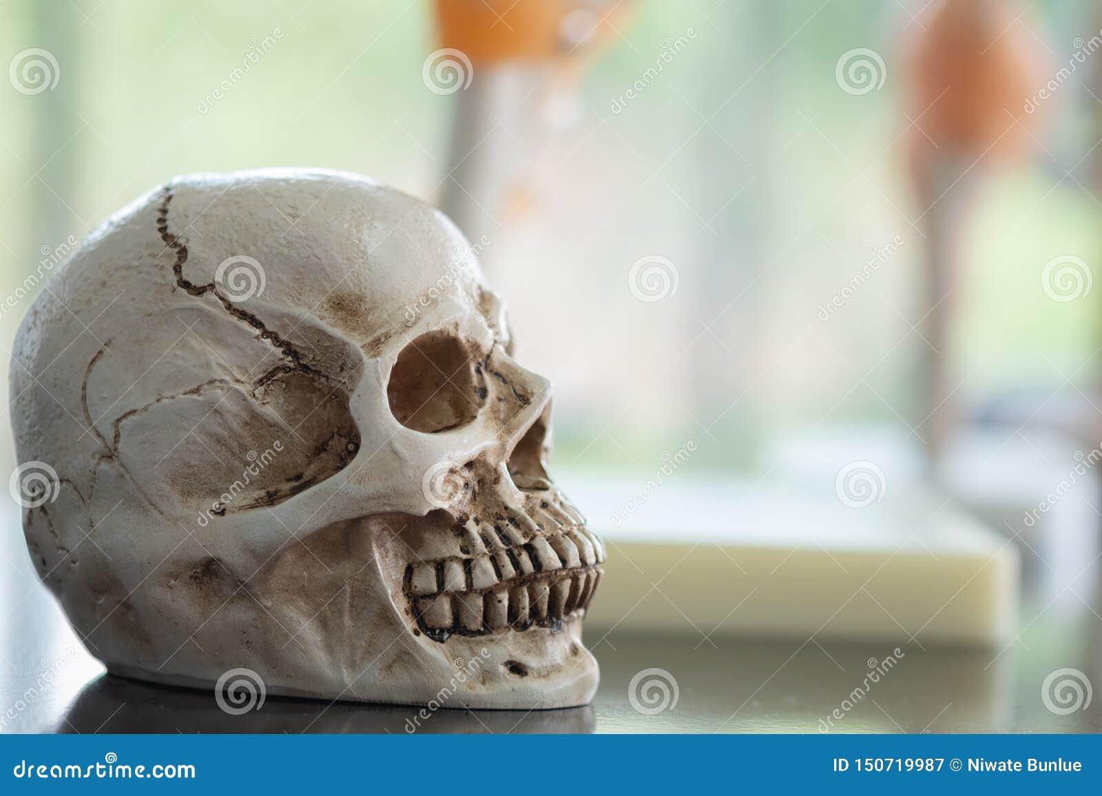 Crânios humanos para o uso na educação