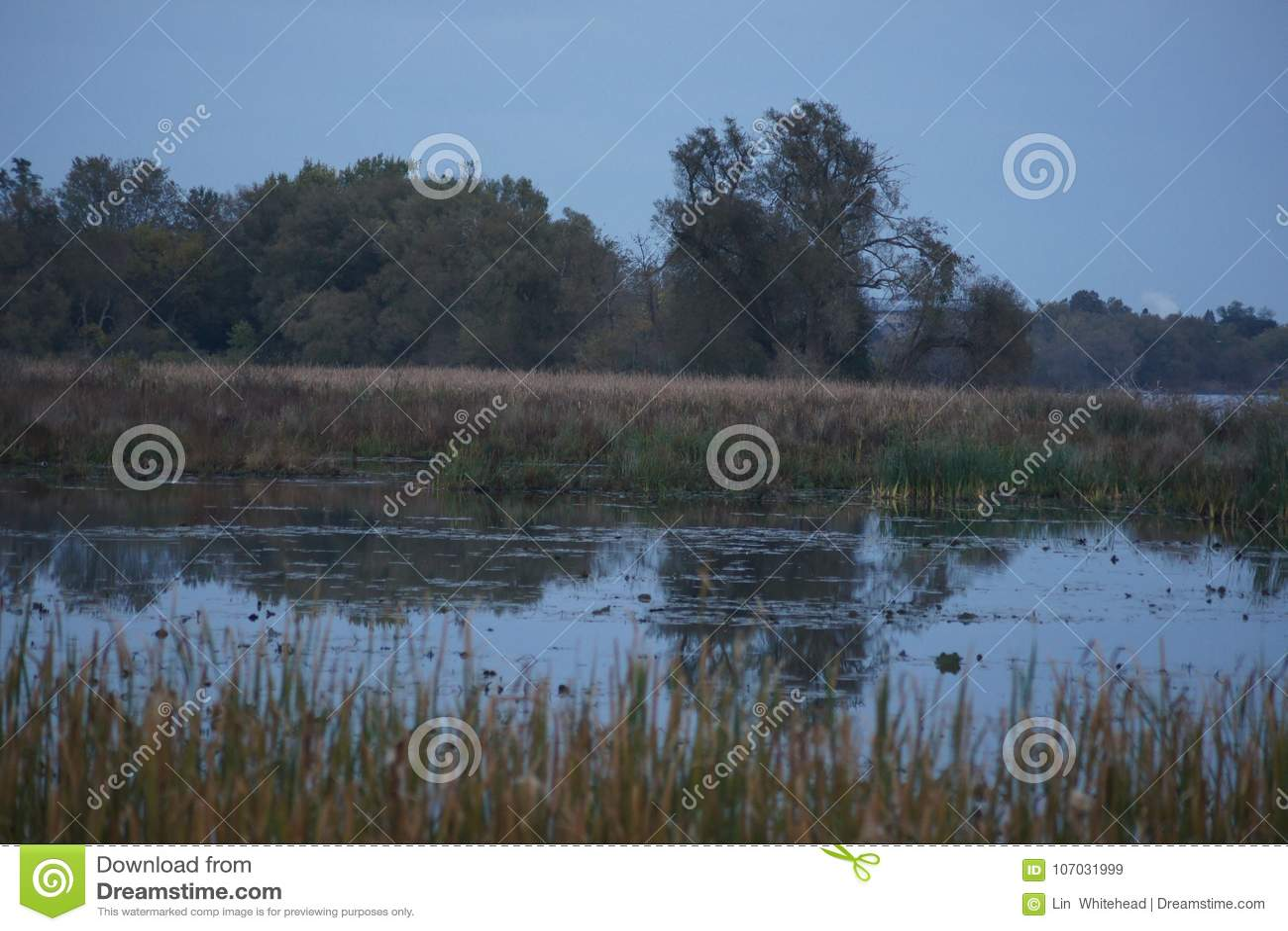 Crépuscule et l étang