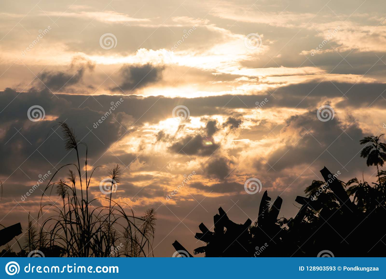 Crépuscule tropical de ciel d arbre et d or de silhouette Fond rural de vue de paysage