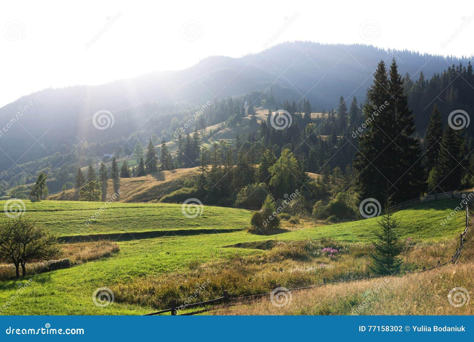 Crêtes de montagne, forêt conifére et pré vert