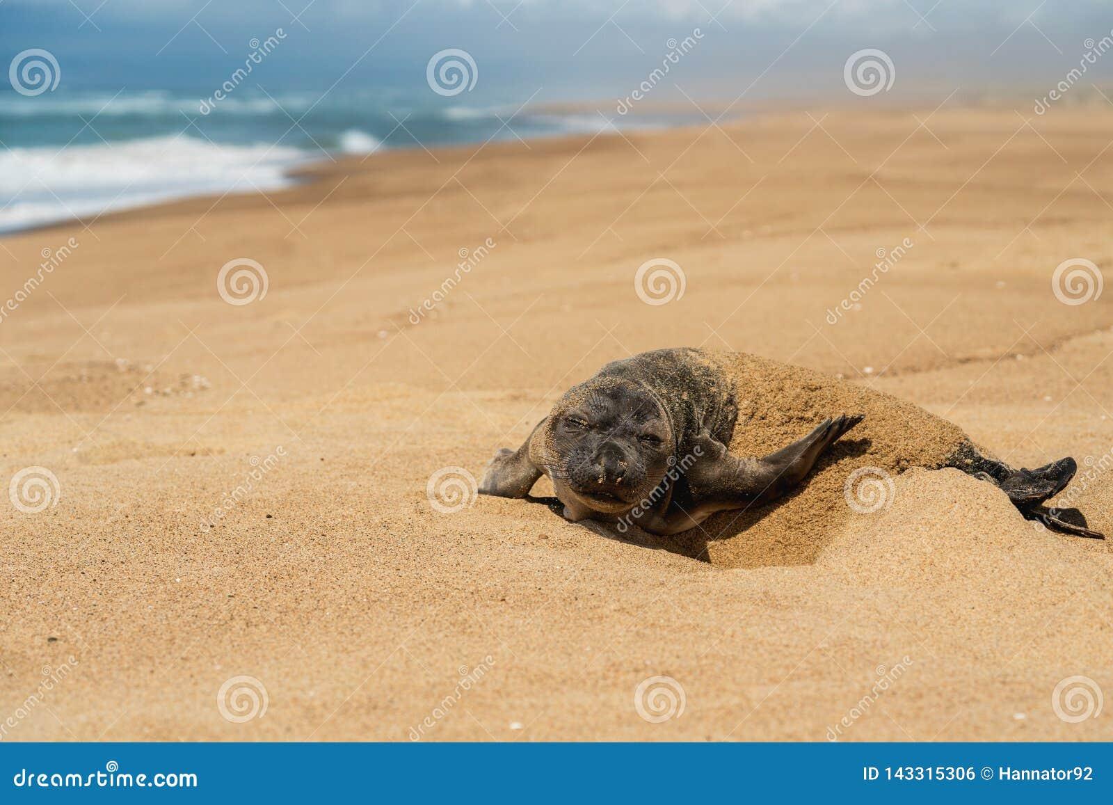 Cr?a de foca reci?n nacida en la playa